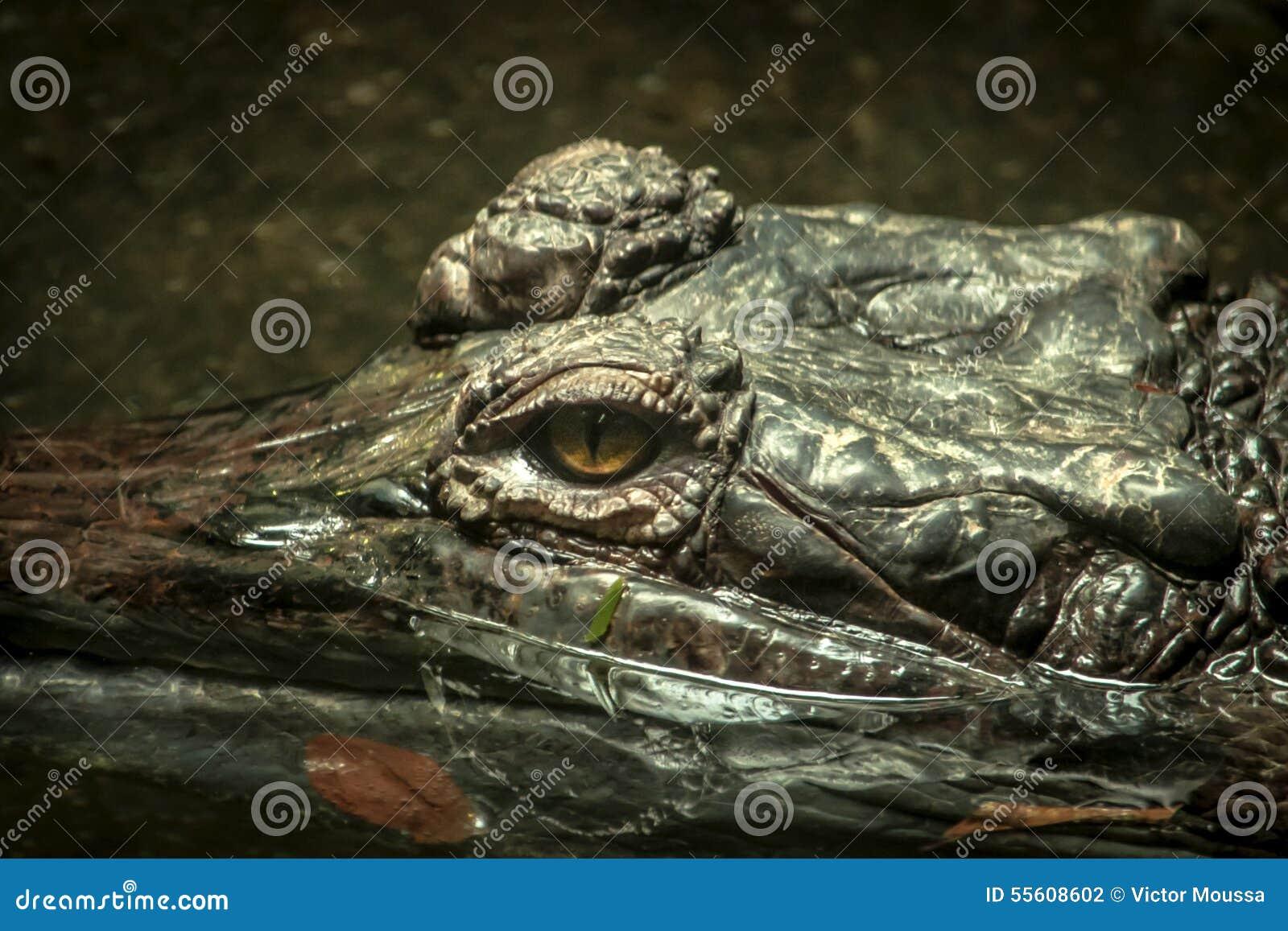 Κροκόδειλος