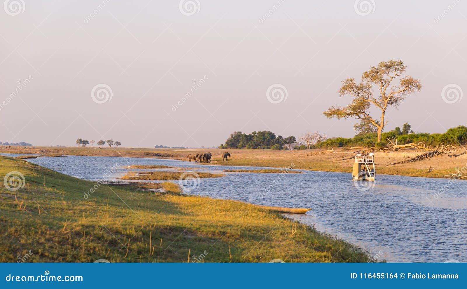 Κρουαζιέρα βαρκών και σαφάρι άγριας φύσης στον ποταμό Chobe, σύνορα της Ναμίμπια Μποτσουάνα, Αφρική Εθνικό πάρκο Chobe, διάσημη ε