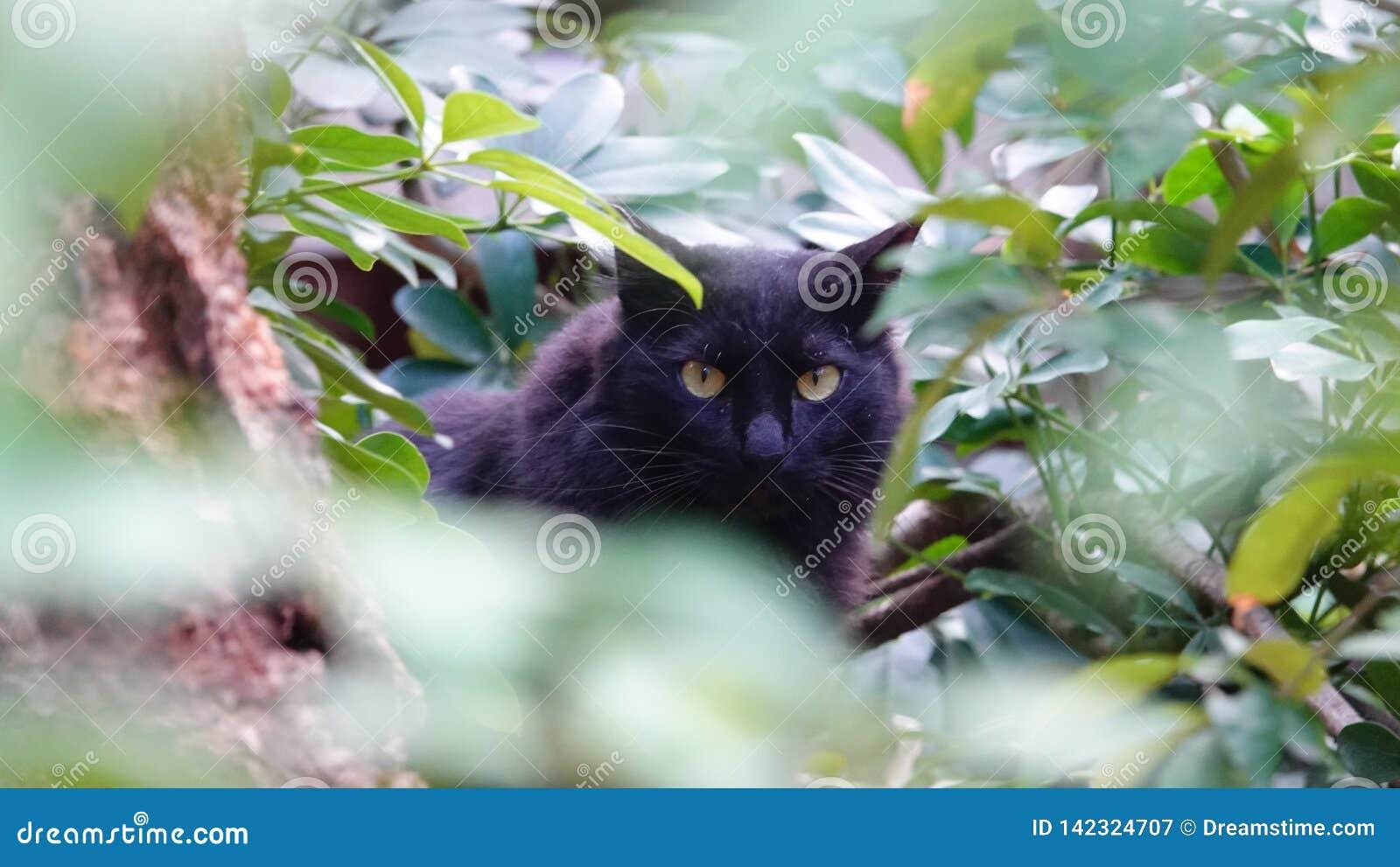 Κρυμμένη μαύρη γάτα