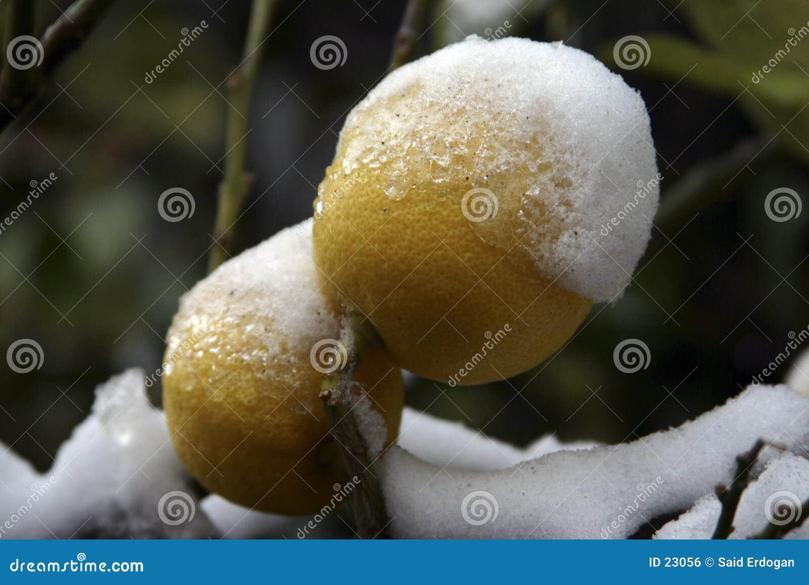 κρύο ΙΙ λεμόνι