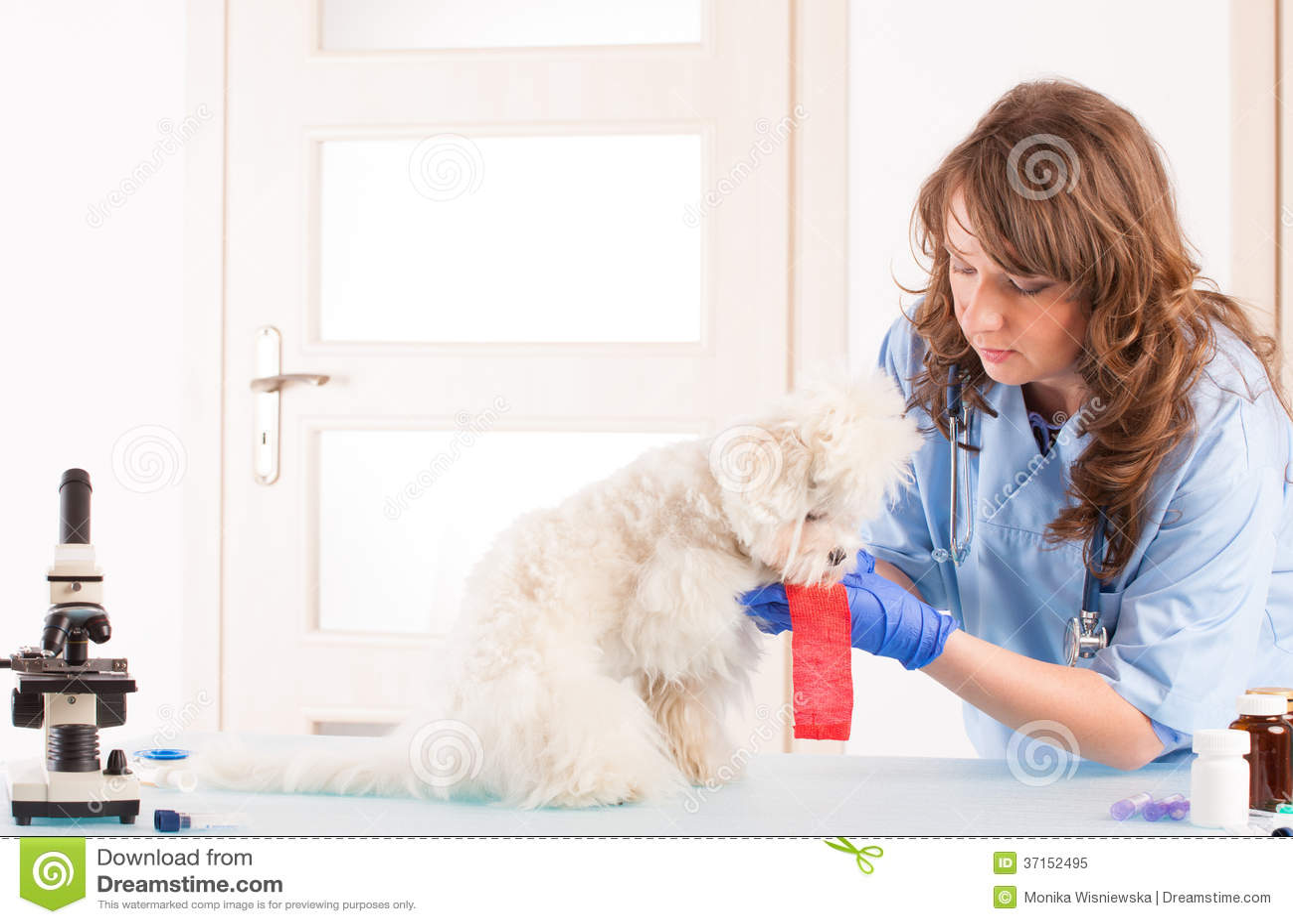 Κτηνίατρος γυναικών με ένα σκυλί
