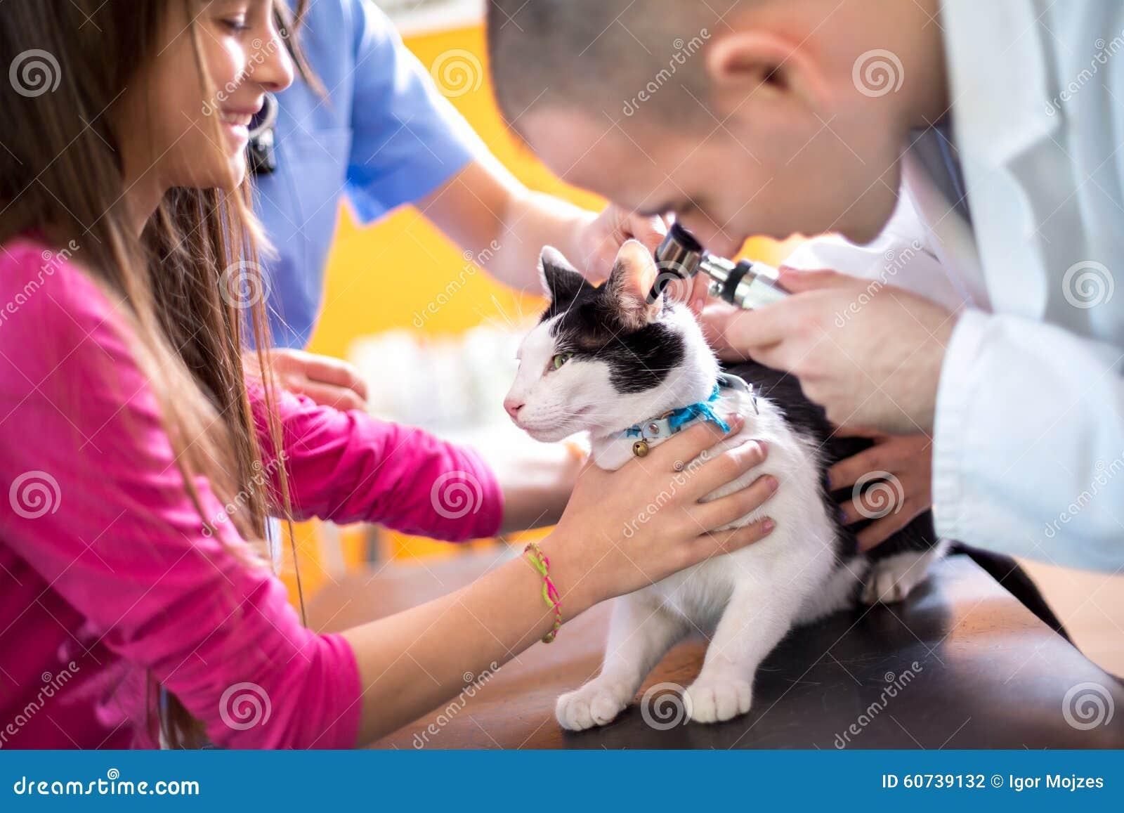 Κτηνίατρος που εξετάζει την ακρόαση της γάτας στον κτηνίατρο κινούμενο
