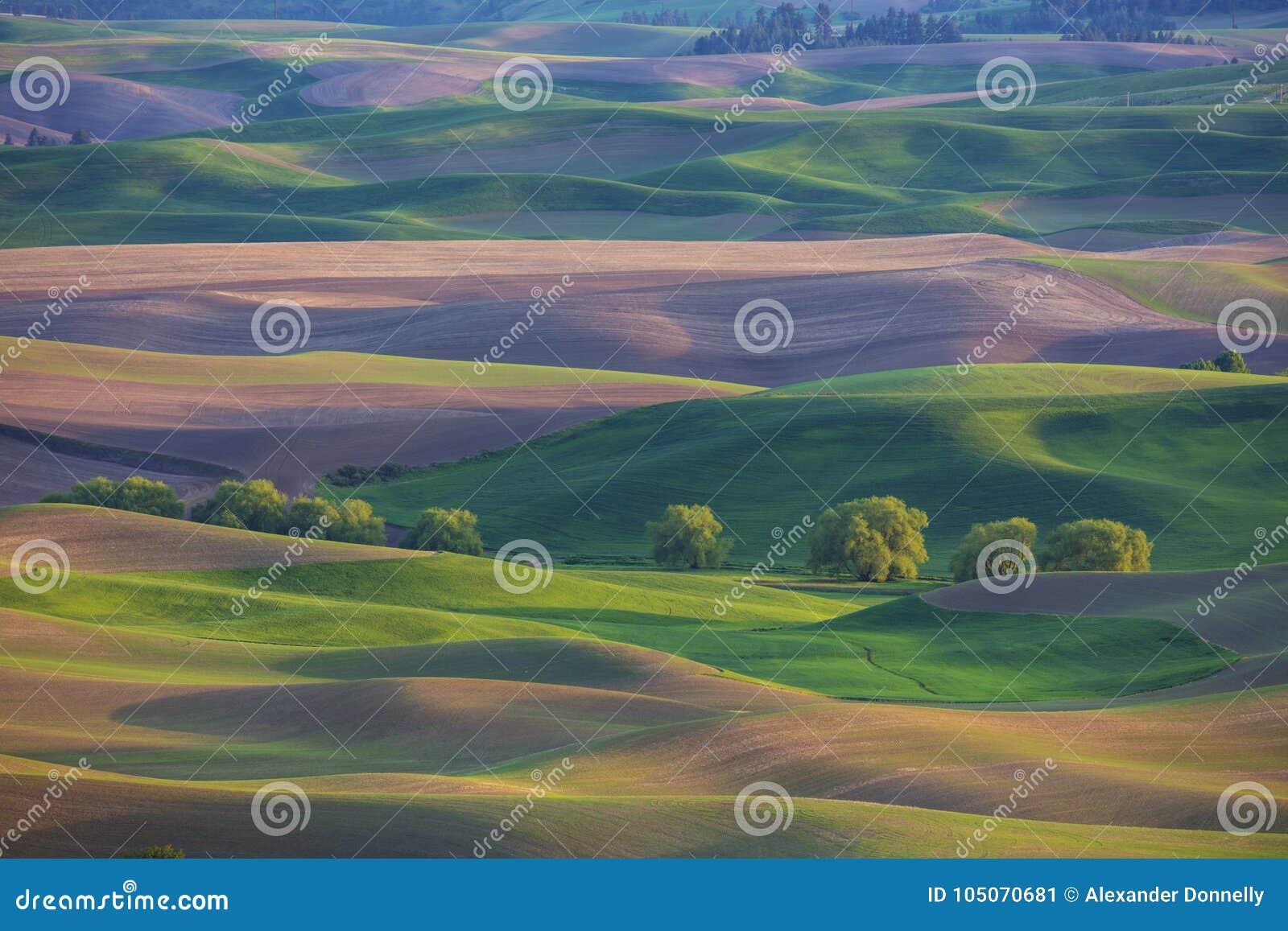 Κυλώντας λόφοι στην περιοχή Palouse του πολιτεία της Washington