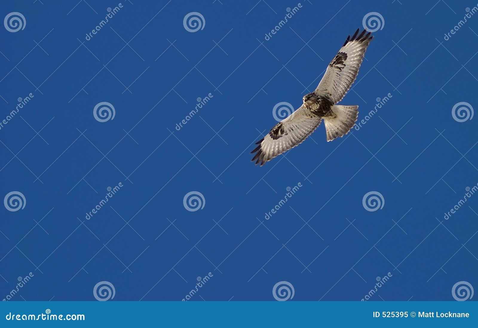 κυνήγι γερακιών