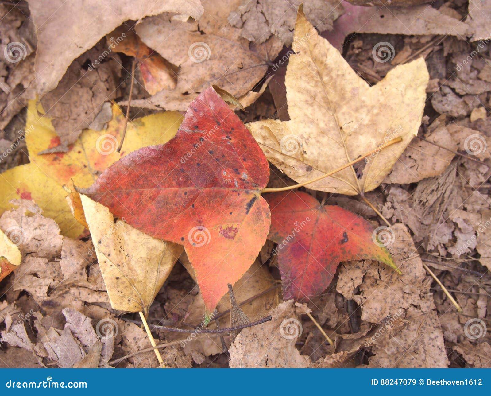 Κόκκινα και κίτρινα φύλλα πτώσης από το δέντρο