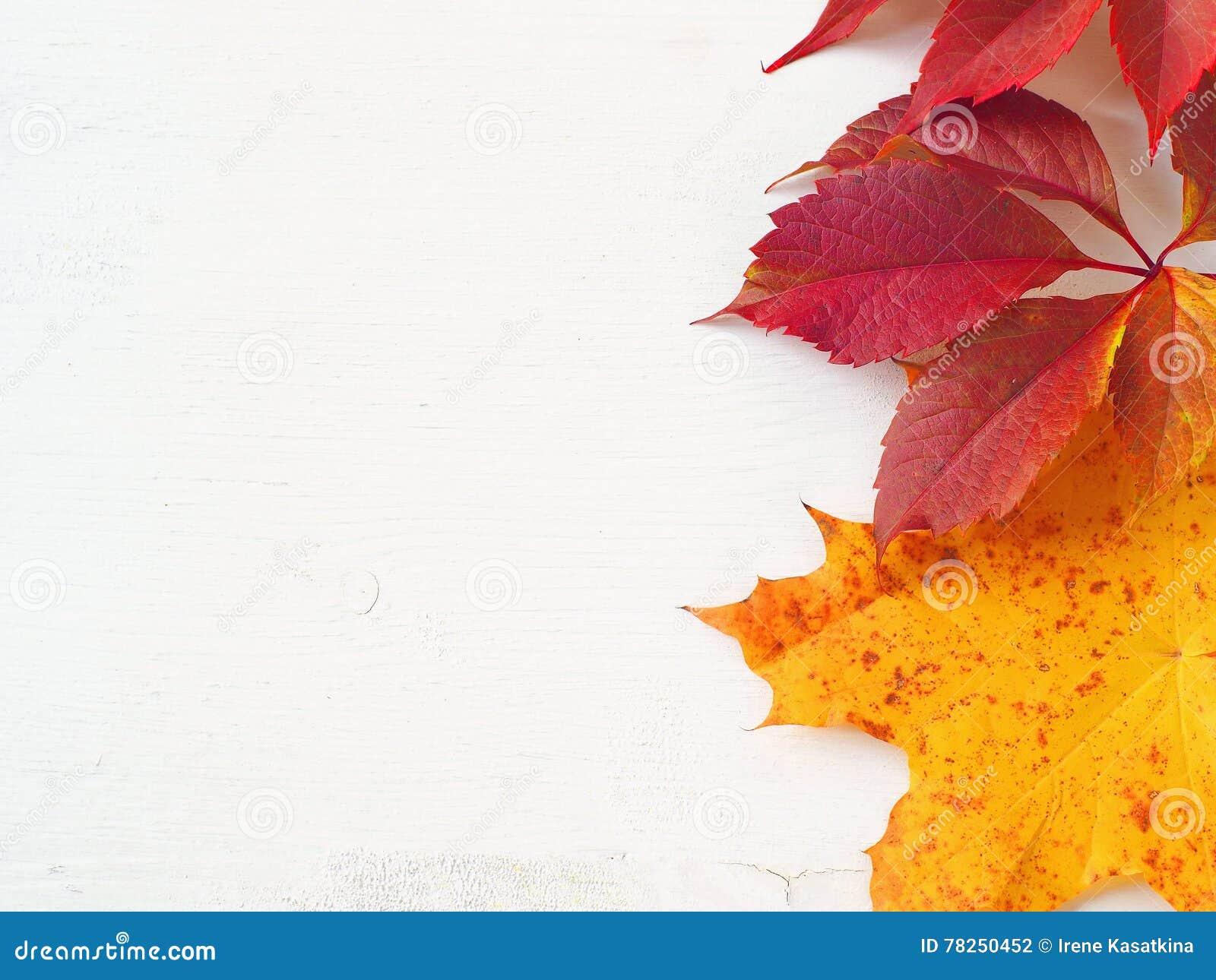 Κόκκινα και κίτρινα φύλλα φθινοπώρου επάνω στο άσπρο ξύλινο υπόβαθρο