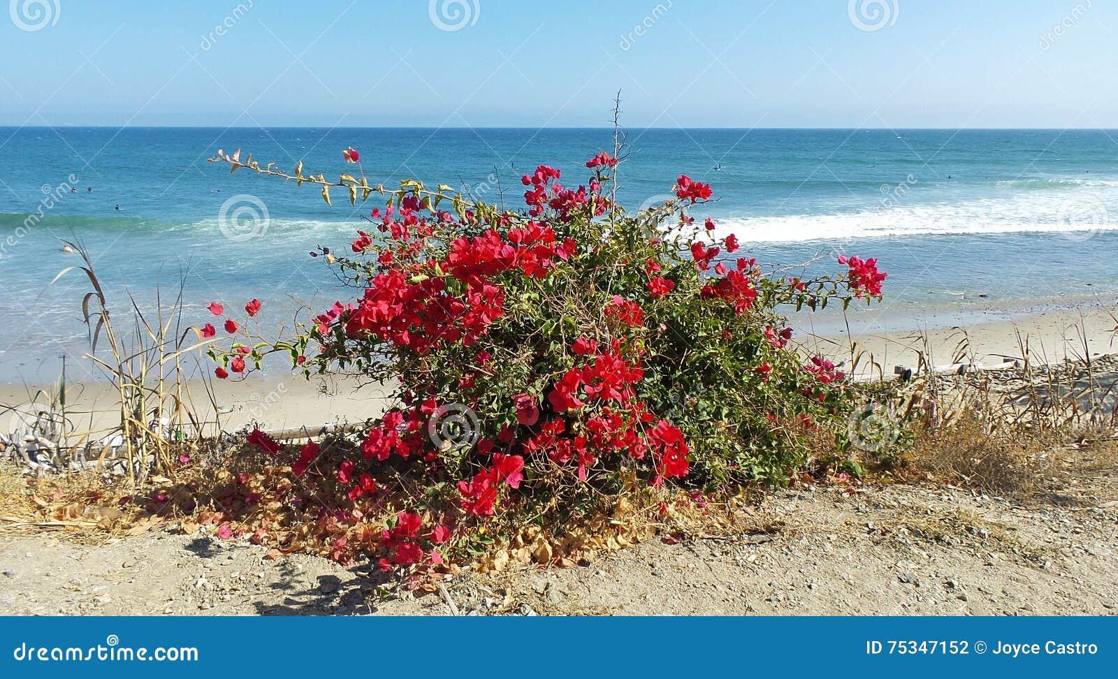 Κόκκινα λουλούδια στην παραλία