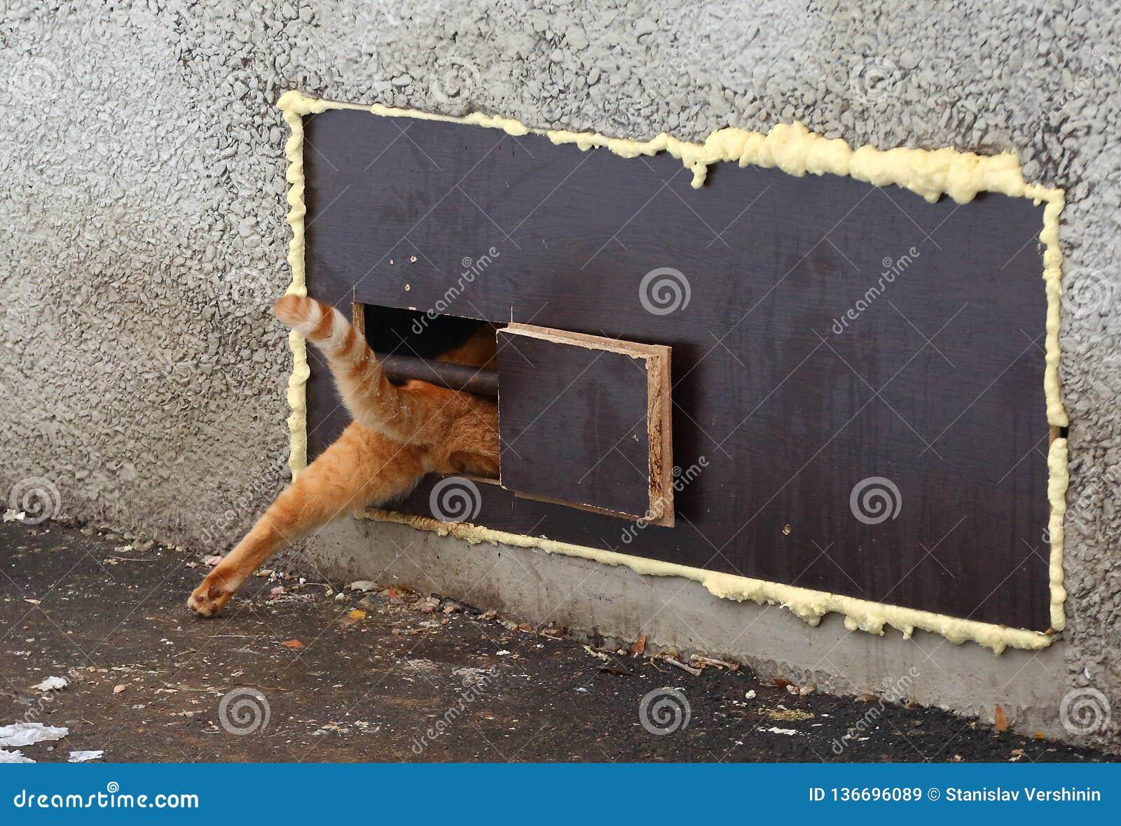 Κόκκινες συμπιέσεις γατών σε μια στενή τρύπα γατών στο παράθυρο υπογείων