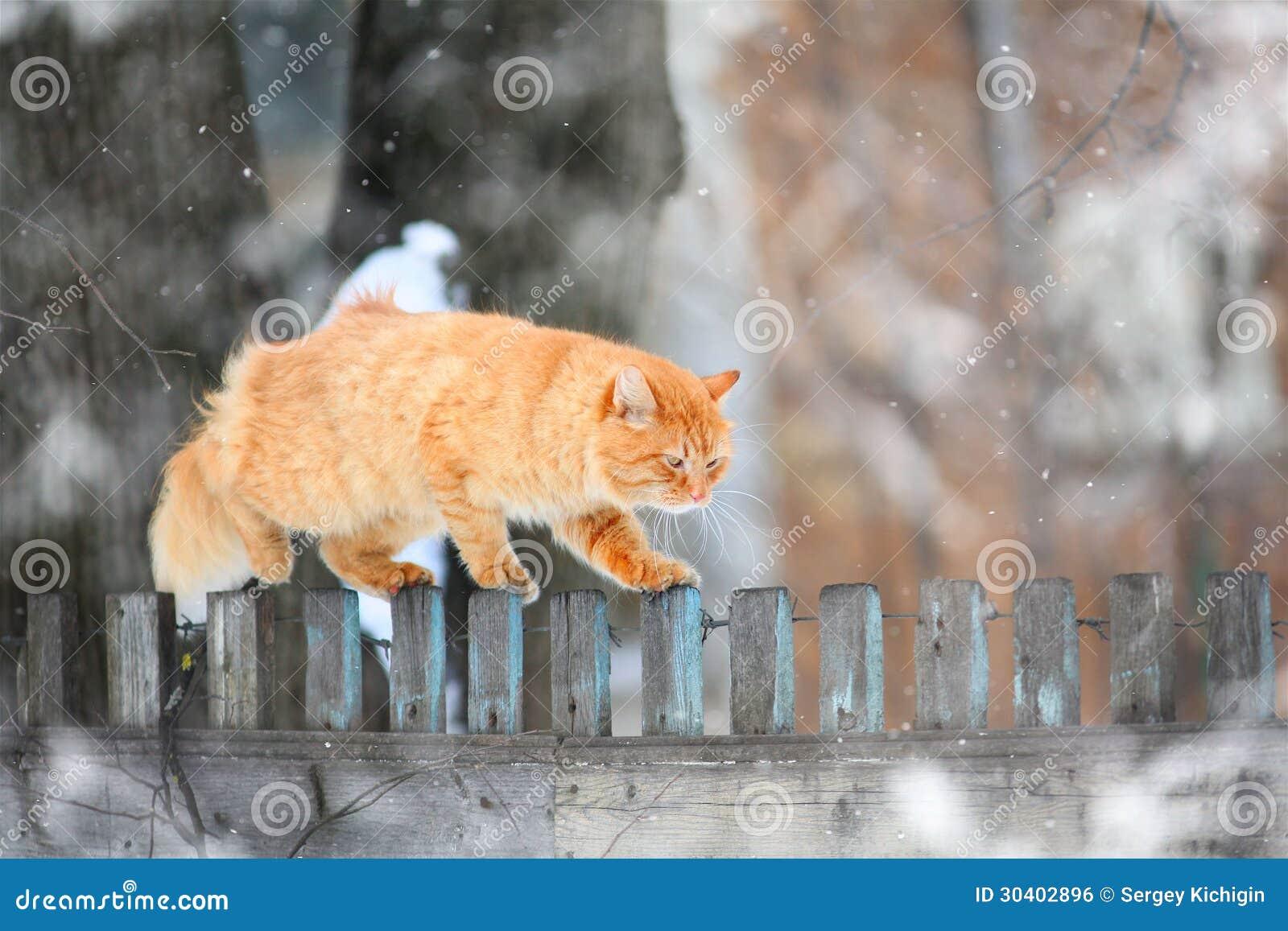 Κόκκινη γάτα σε έναν φράκτη
