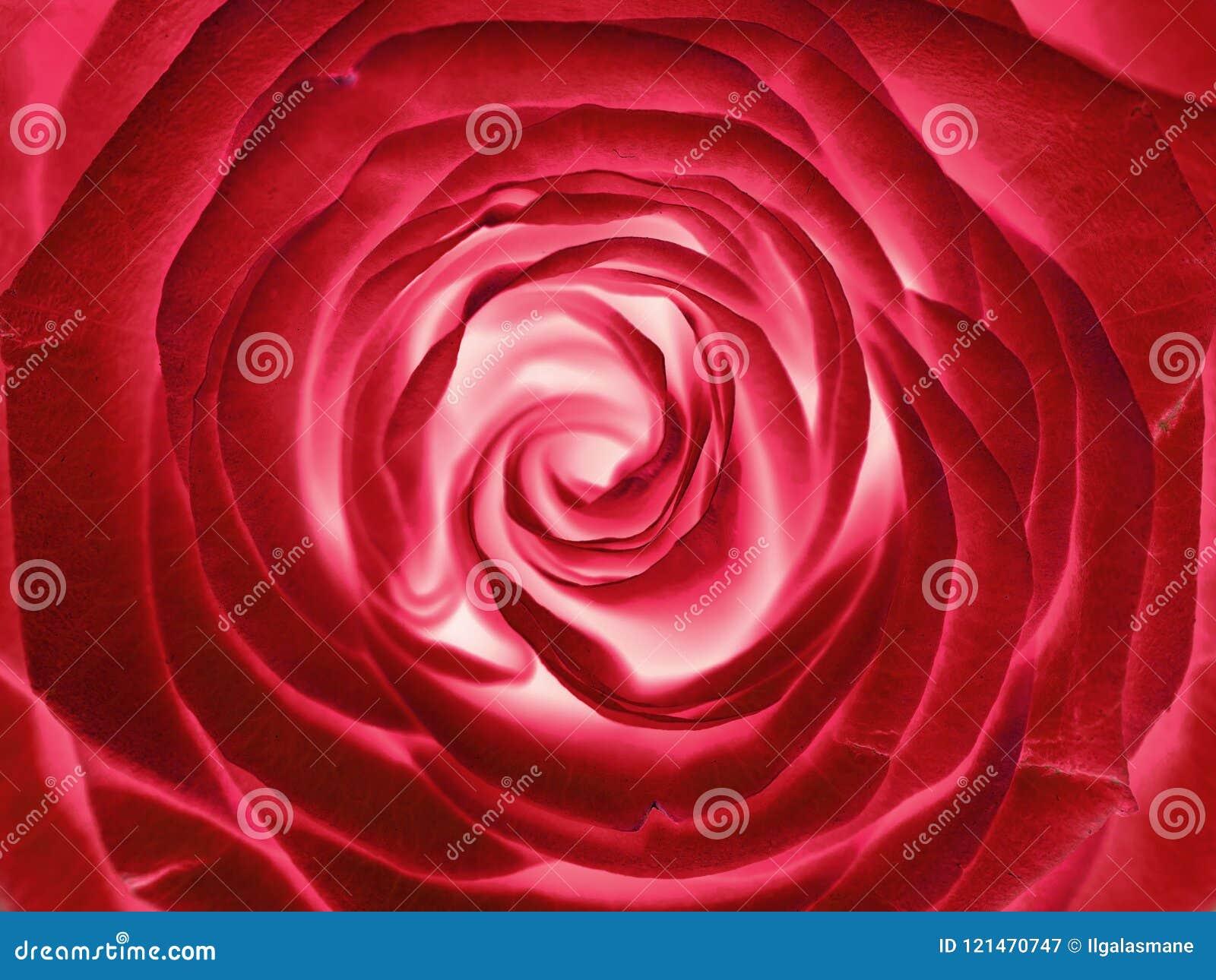 Κόκκινος αυξήθηκε λουλούδι, κλείνει επάνω