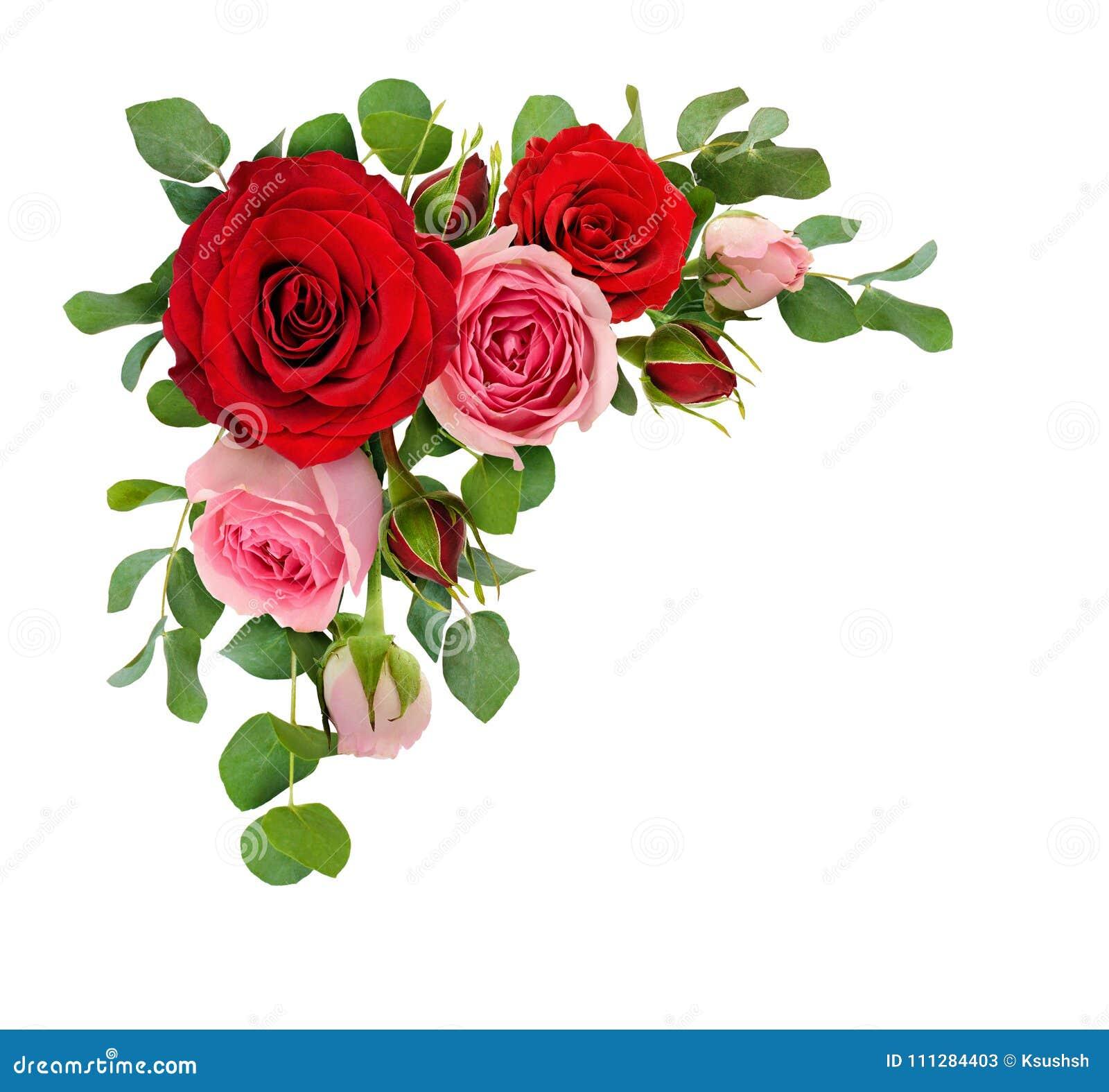 Κόκκινος και ρόδινος αυξήθηκε λουλούδια με τα φύλλα ευκαλύπτων σε μια γωνία arr