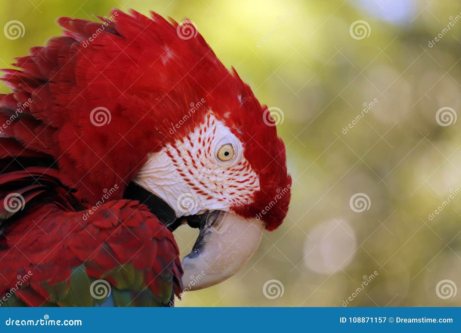 Μεγάλο πουλί στρατιωτικό