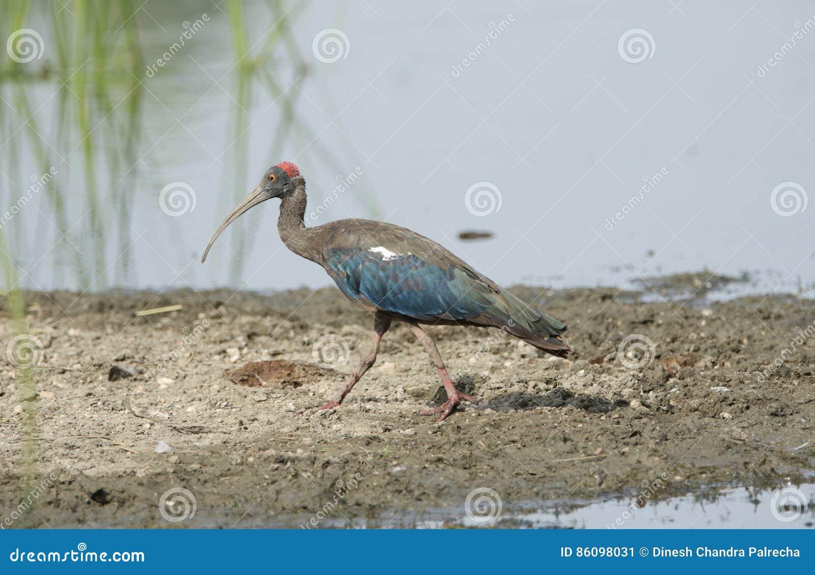 Μεγάλο πουλί και τα πόδια