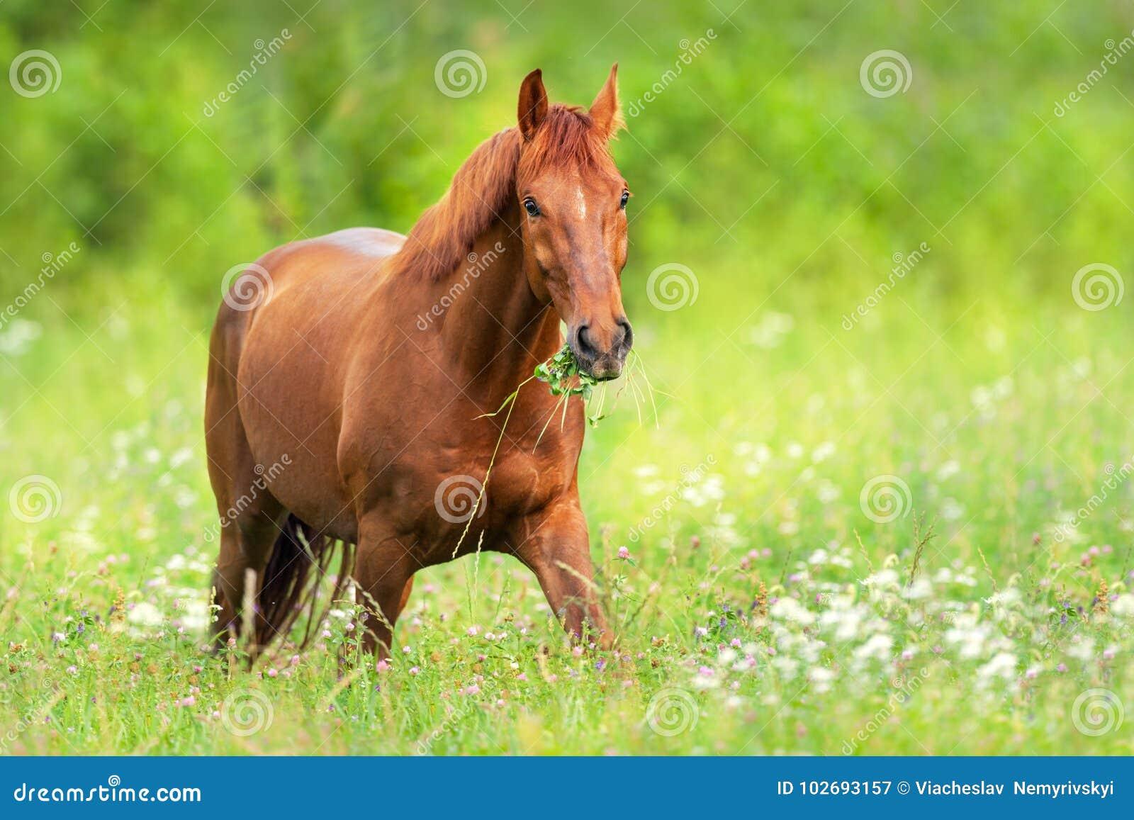 Κόκκινο άλογο στα λουλούδια