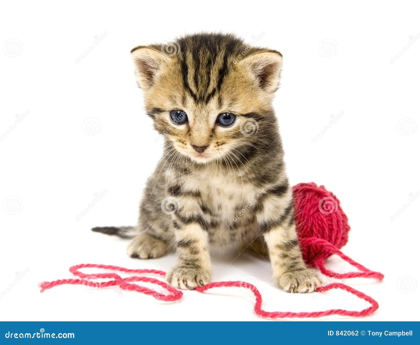κόκκινο άσπρο νήμα γατακιών