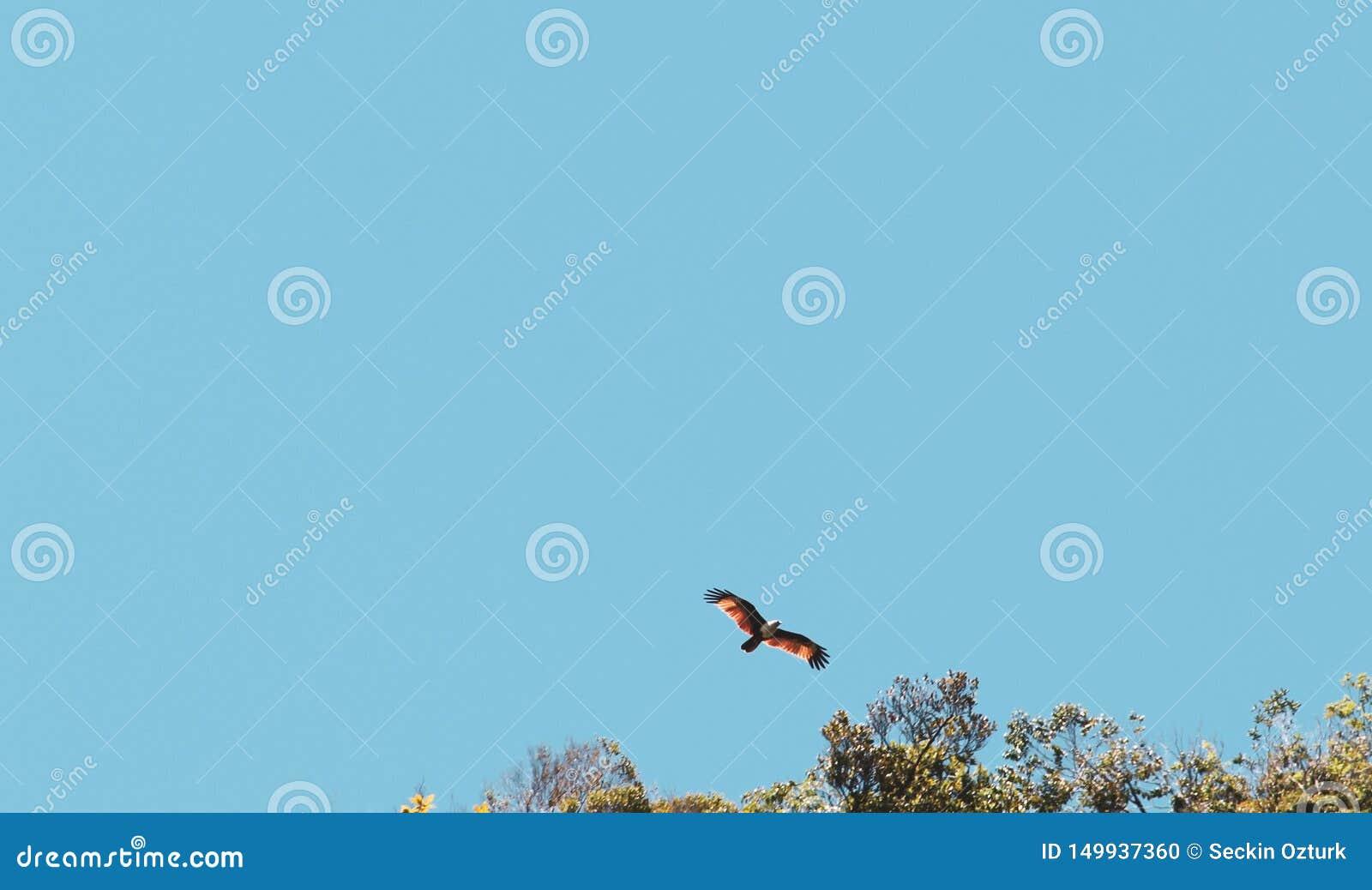 κόκκινο γεράκι που πετά πέρα από τον ουρανό