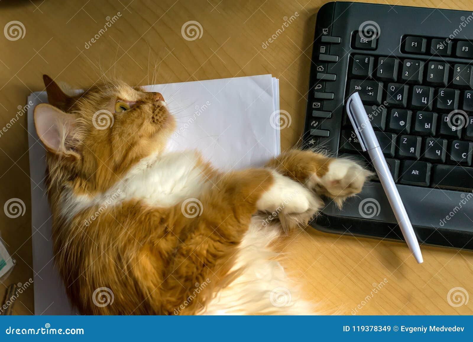 Κόκκινο γούνινο pussycat που βρίσκεται κοντά στο πληκτρολόγιο στον πίνακα