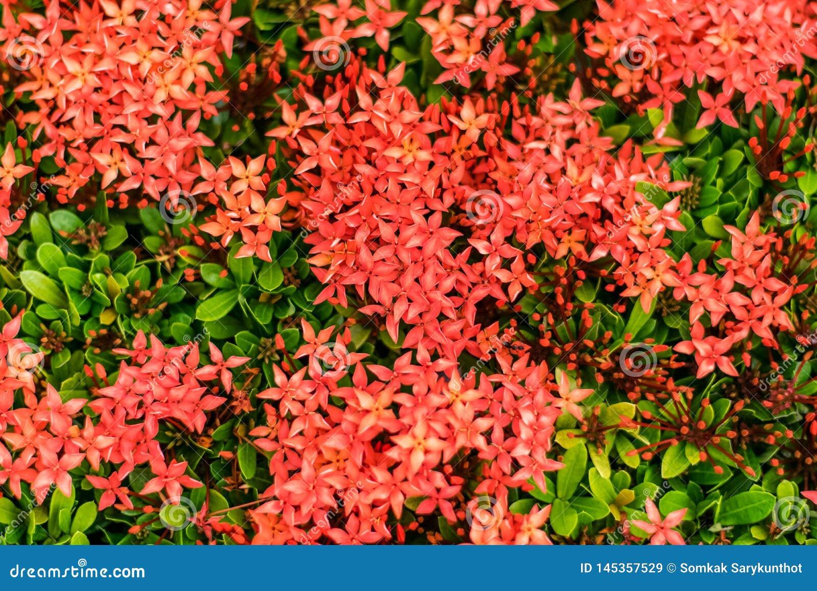 Κόκκινο λουλούδι ακίδων