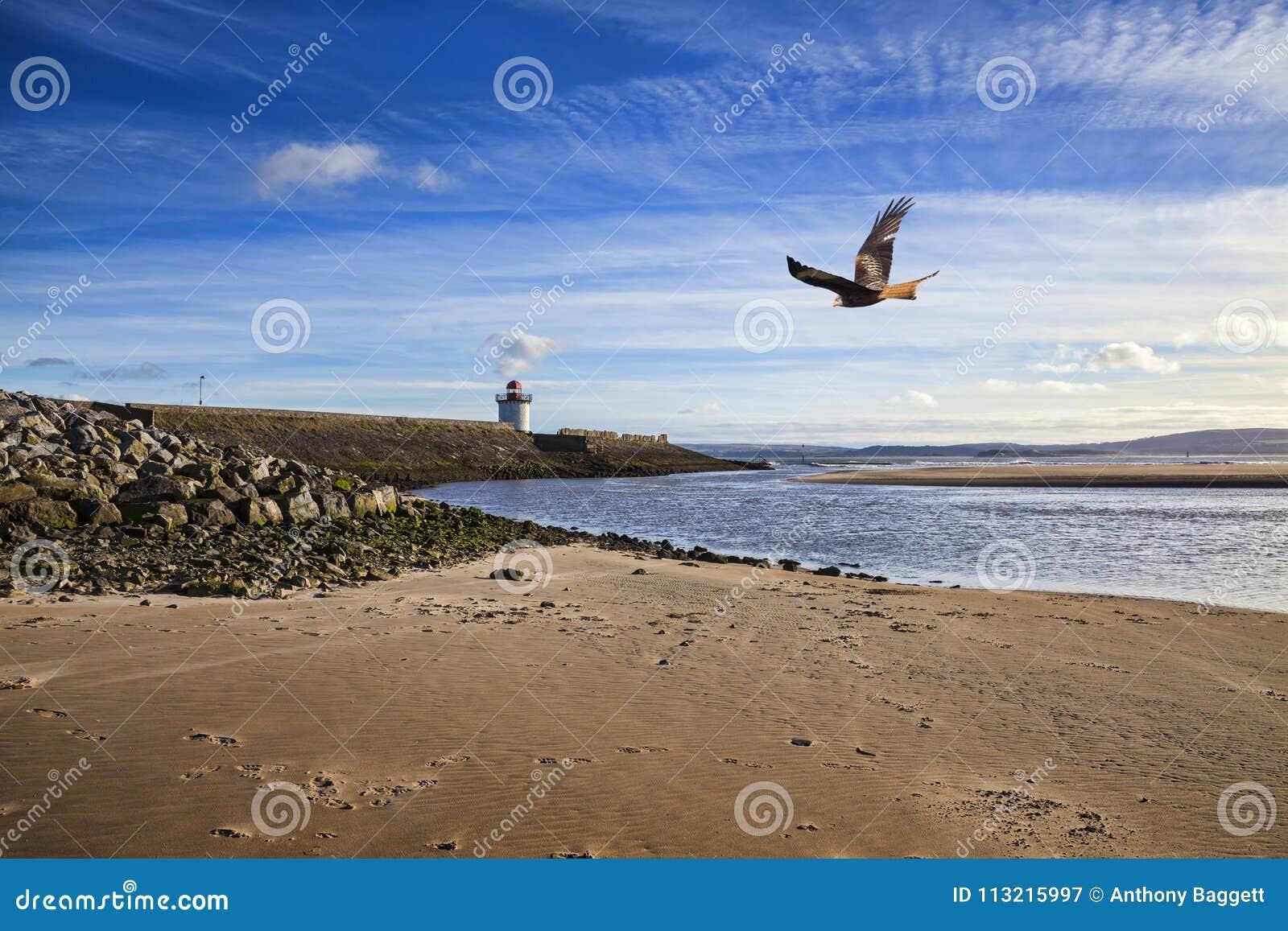 Κόκκινο πουλί ικτίνων που πετά πέρα από το λιμένα Burry