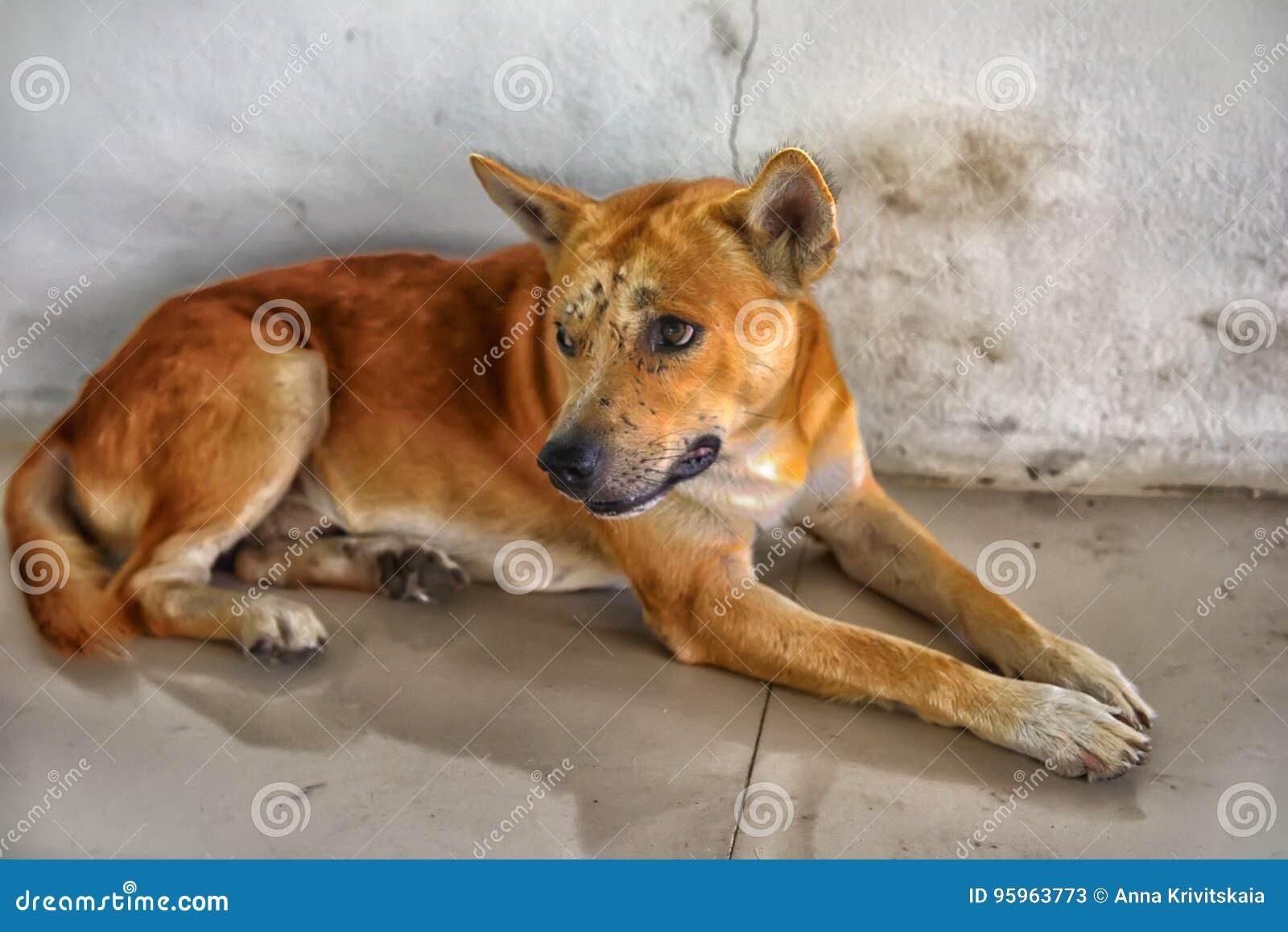Κόκκινο σκυλί με τους μώλωπες