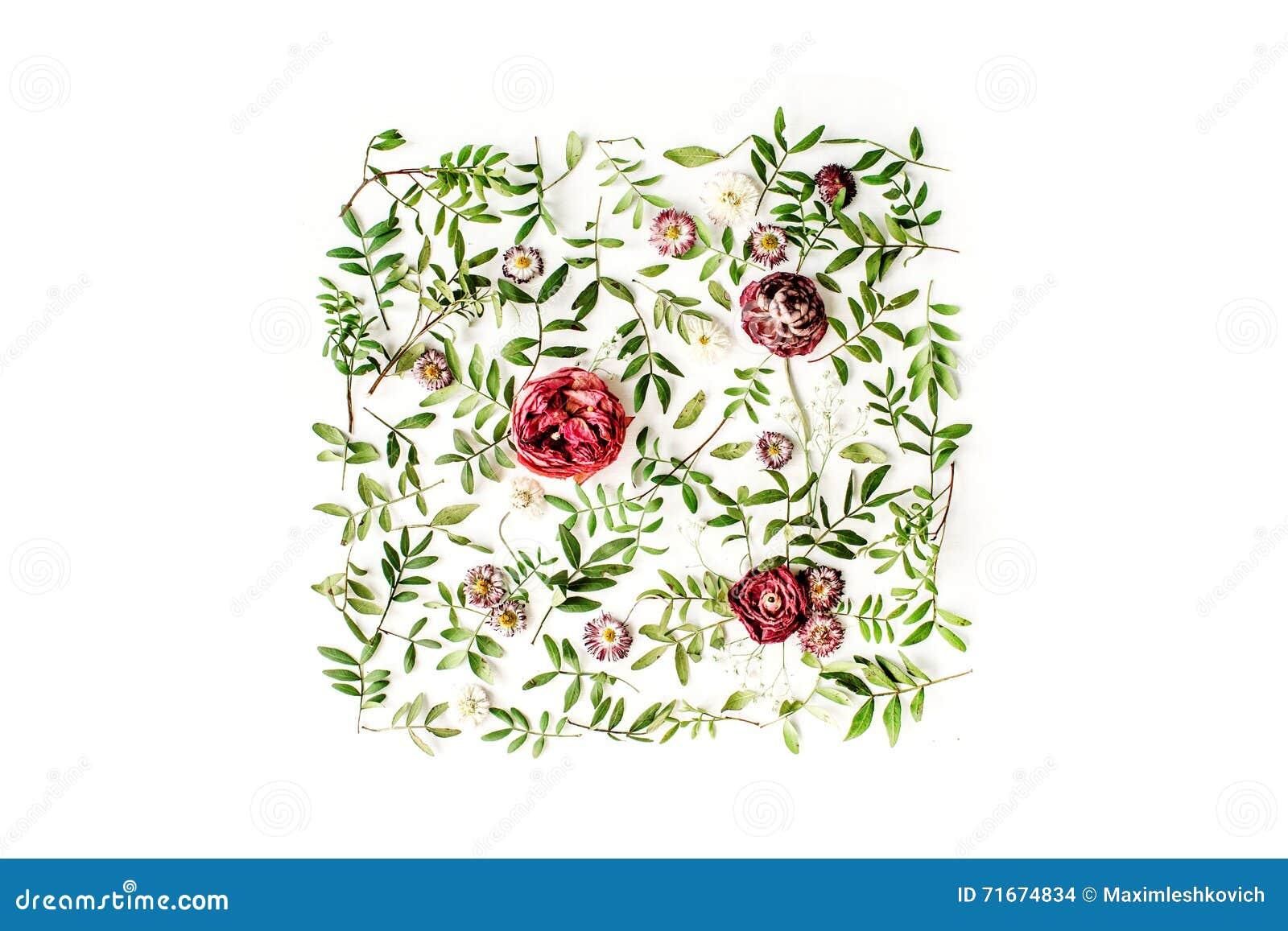 Κόκκινο τριαντάφυλλα ή βατράχιο και πράσινα φύλλα στο άσπρο υπόβαθρο