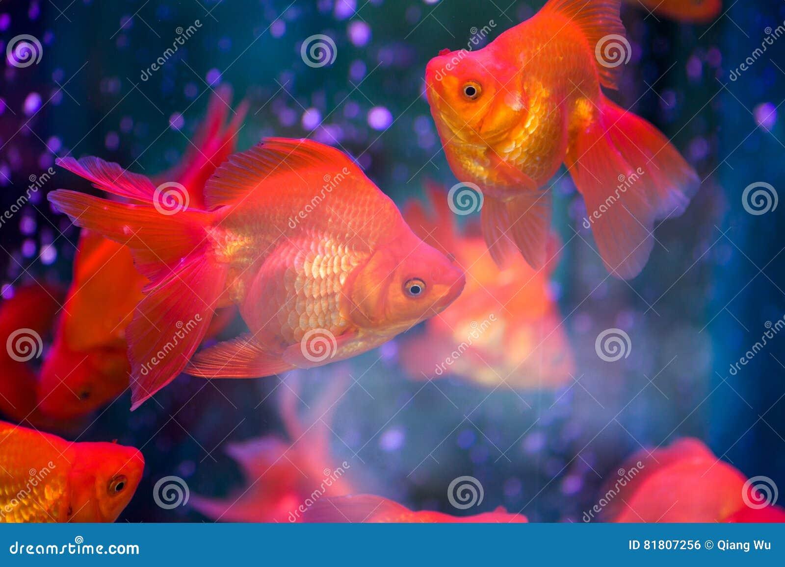 Κόκκινο Goldfish