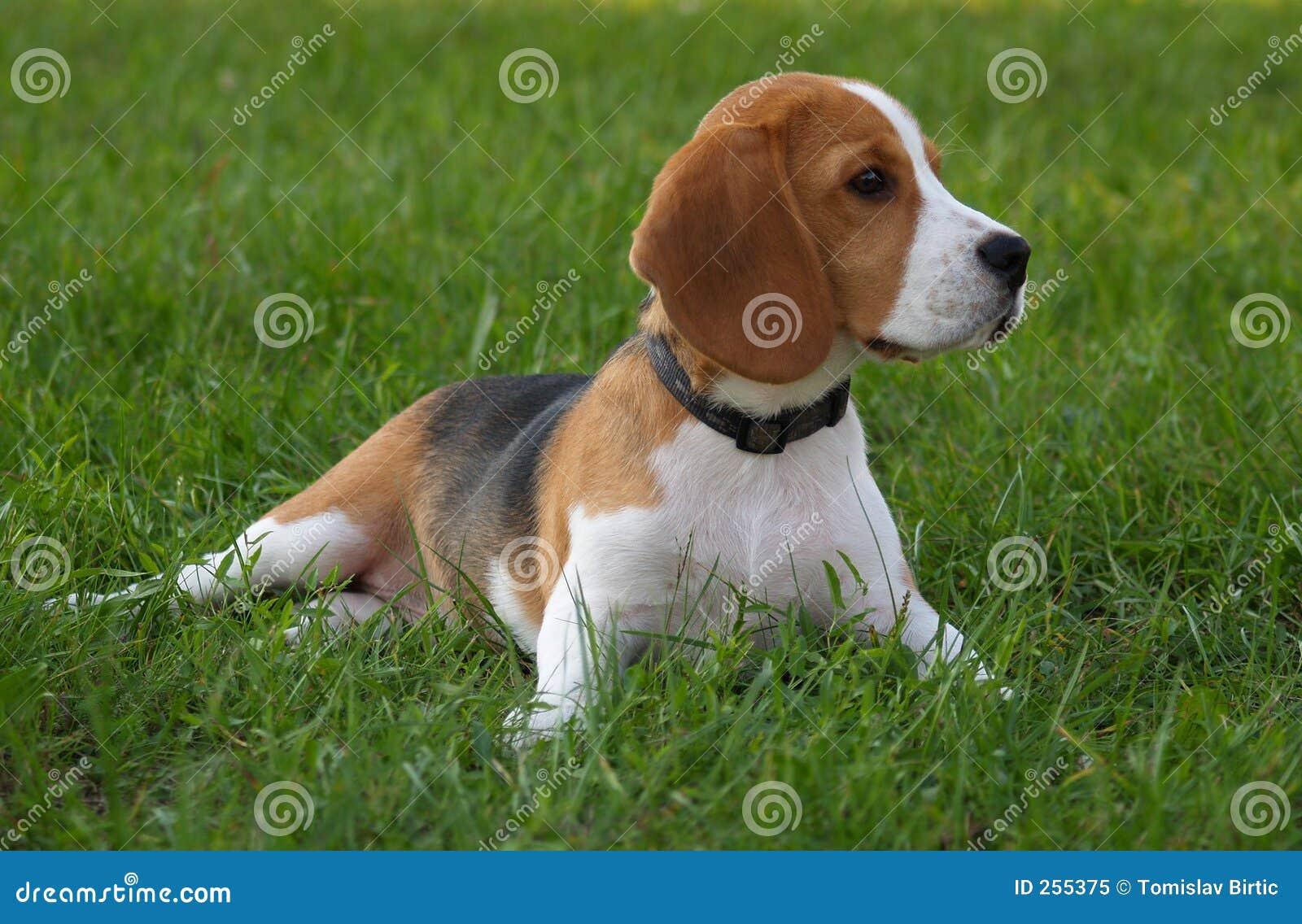 κόσμος ορυχείων σκυλιών