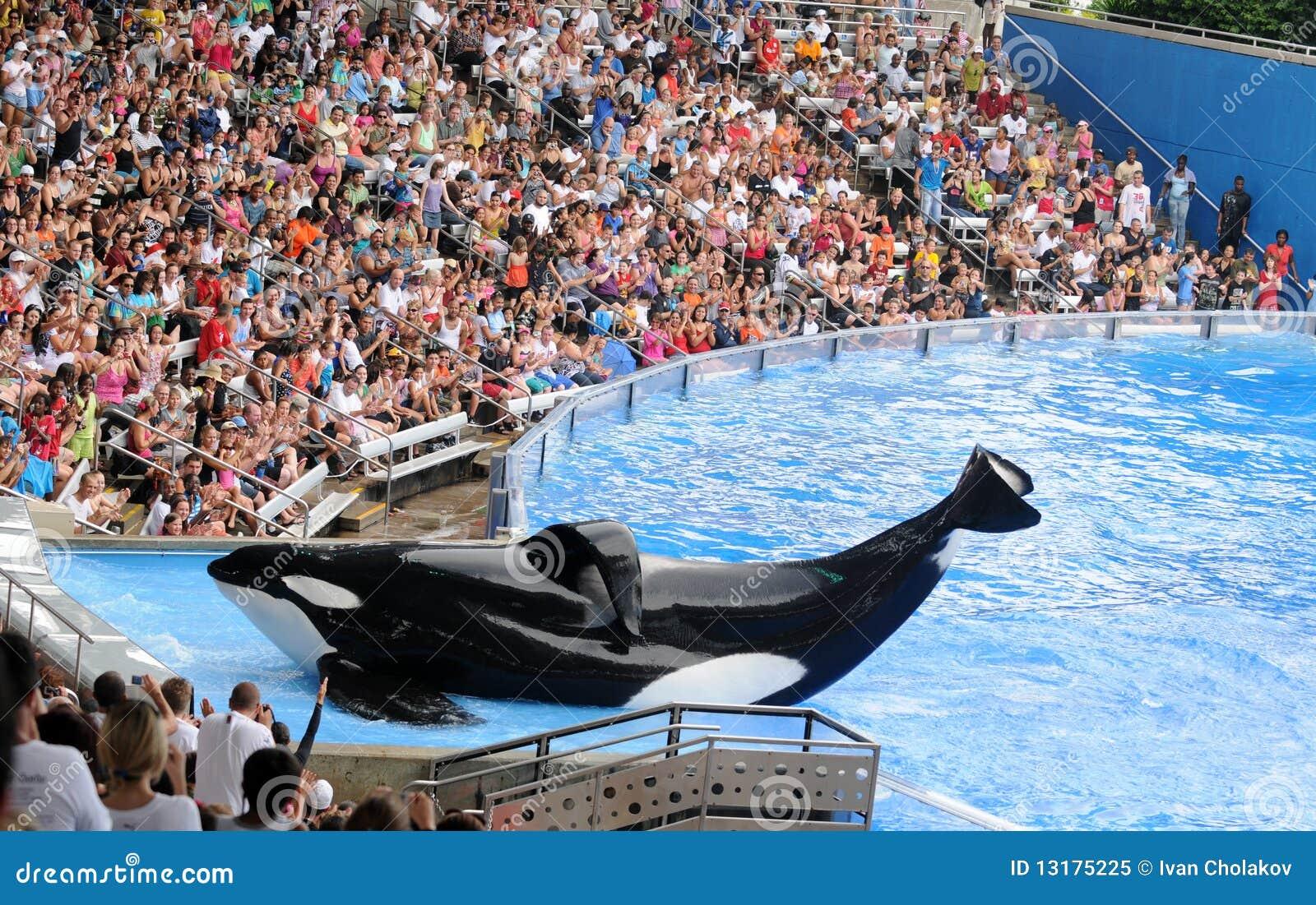 κόσμος φαλαινών θάλασσα&sigma