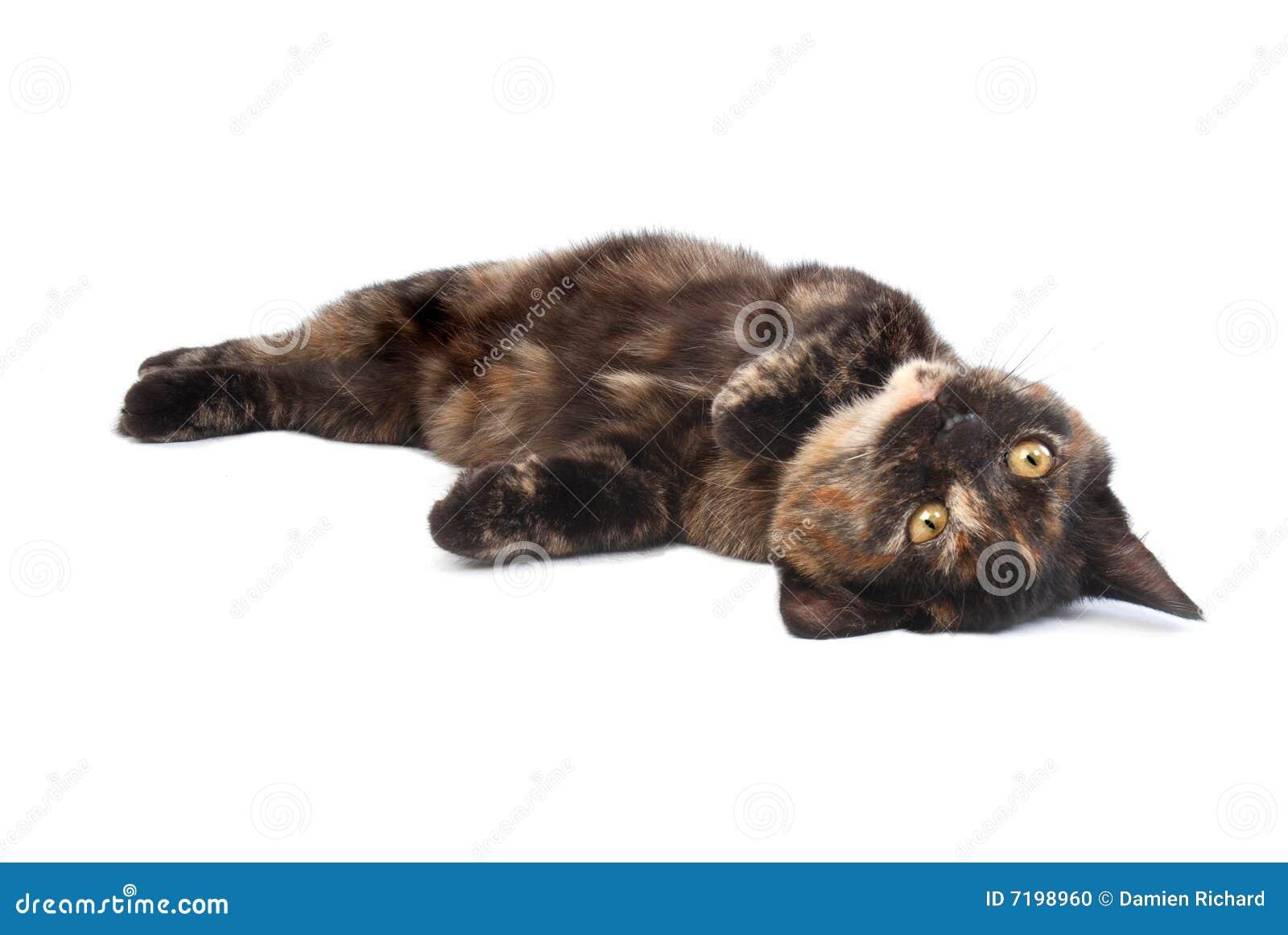 κύλισμα γατακιών