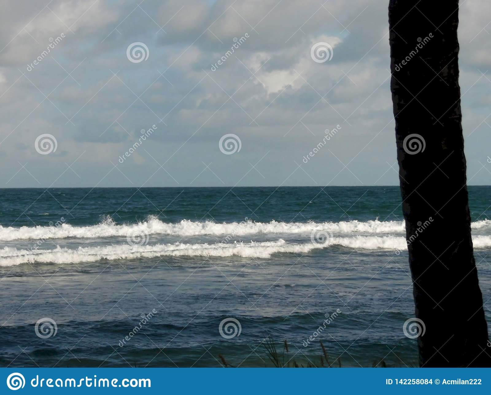 Κύματα και ένας φοίνικας