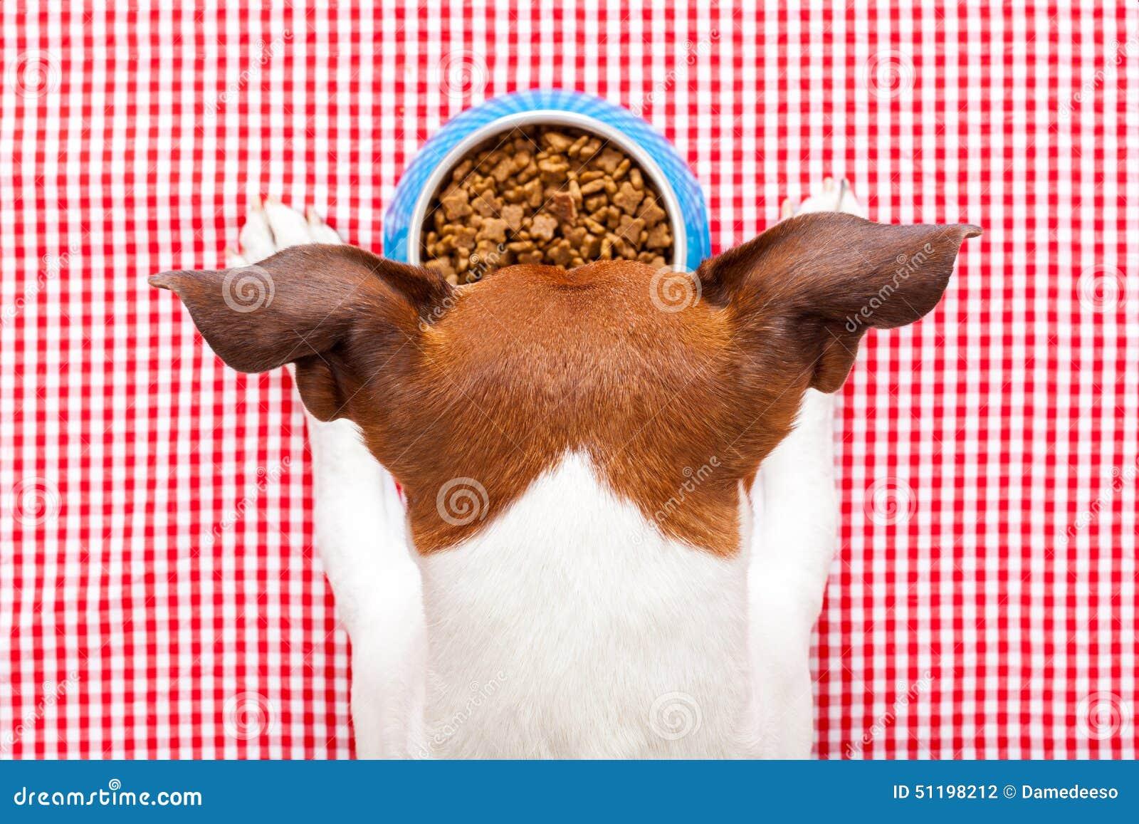 Κύπελλο τροφίμων σκυλιών