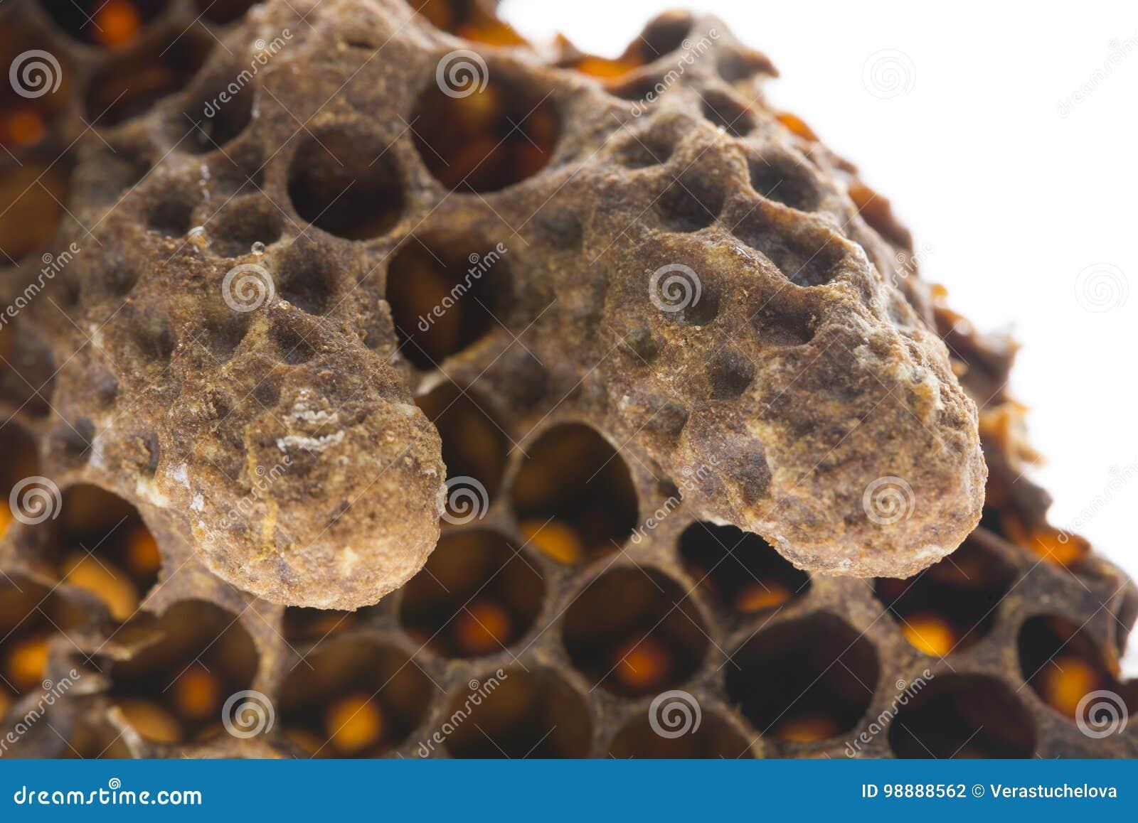 Κύτταρα βασίλισσας σμήνων, κύτταρα βασίλισσας έκτακτης ανάγκης, τεχνητά κύτταρα βασίλισσας με τις βασίλισσες μελισσών