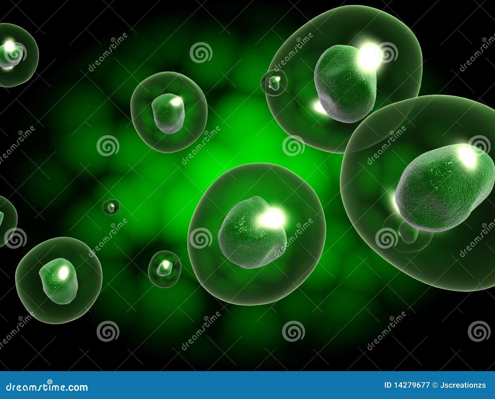 κύτταρο