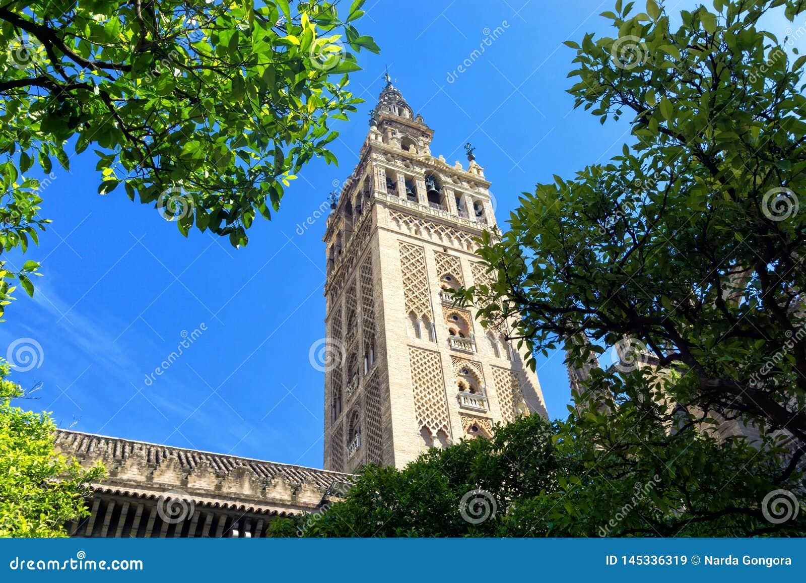 Κώνος του καθεδρικού ναού της Σεβίλης στην Ισπανία