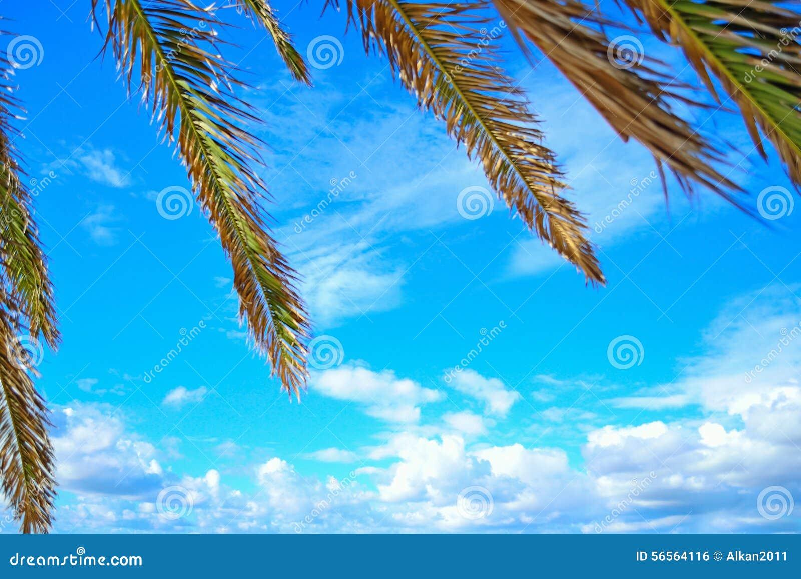 Download Κλάδοι φοινικών μια σαφή θερινή ημέρα στη Σαρδηνία Στοκ Εικόνες - εικόνα από ταξίδι, διακοπές: 56564116