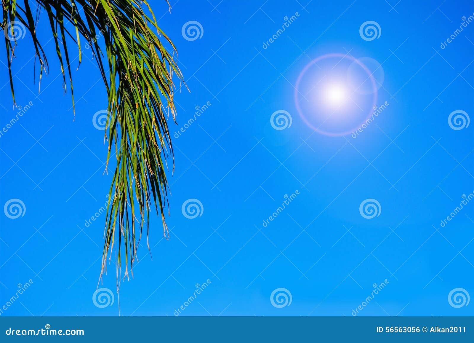 Download Κλάδος φοινικών κάτω από έναν λάμποντας ήλιο Στοκ Εικόνες - εικόνα από φλόγα, σύννεφο: 56563056