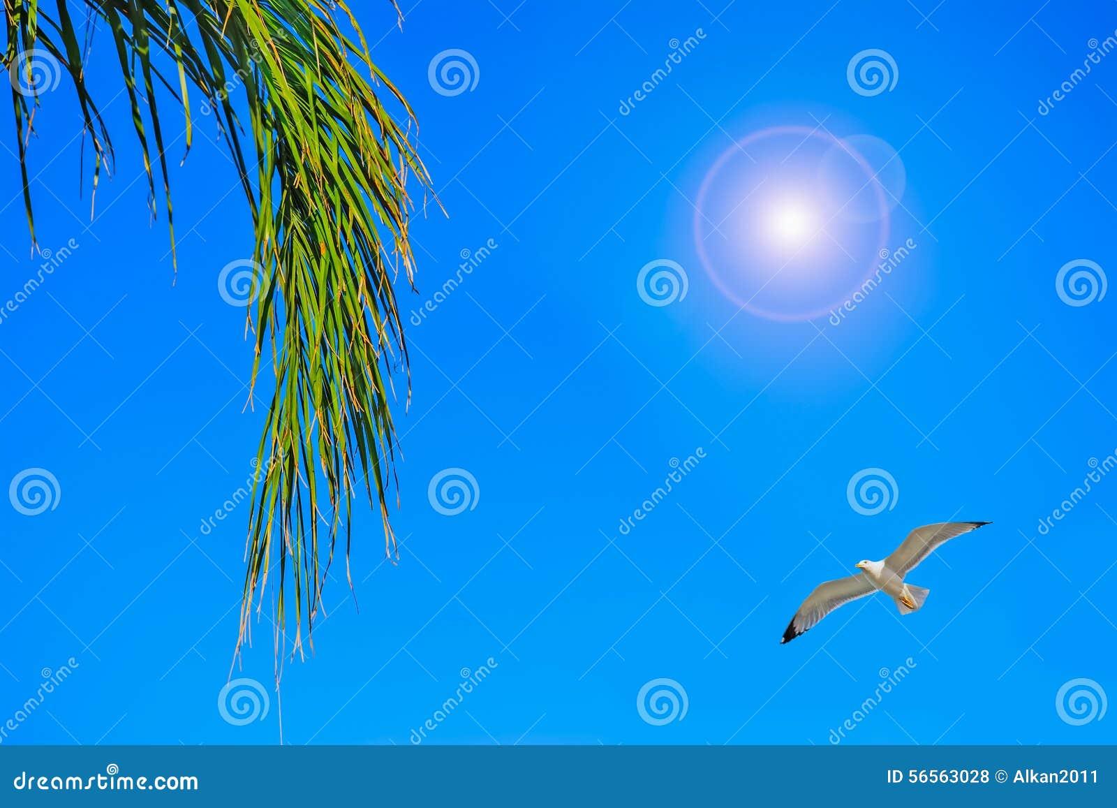 Download Κλάδος φοινικών κάτω από πετώντας Seagull Στοκ Εικόνες - εικόνα από φύλλο, έξυπνο: 56563028