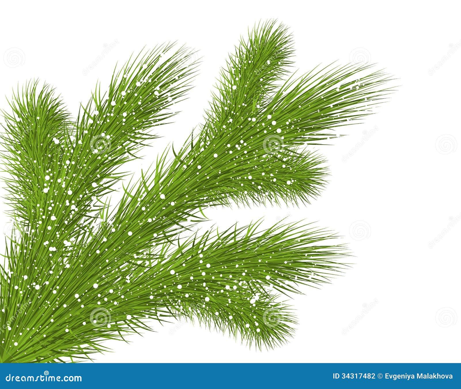 Κλάδος χριστουγεννιάτικων δέντρων