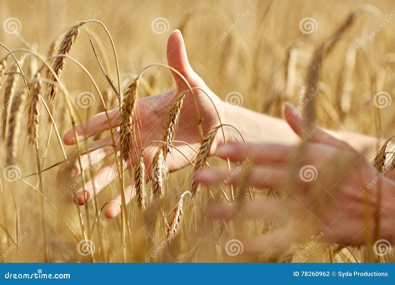 Κλείστε επάνω της γυναίκας παραδίδει τον τομέα δημητριακών