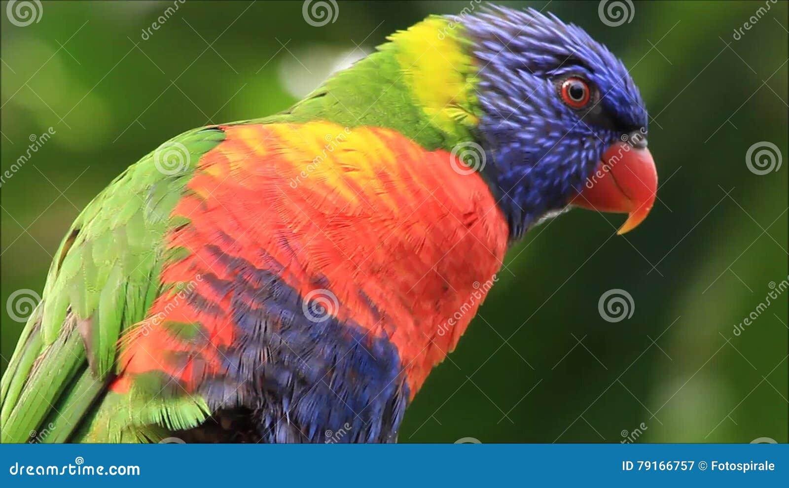 μεγάλο πουλί ταλαντεύεται ώριμη porne