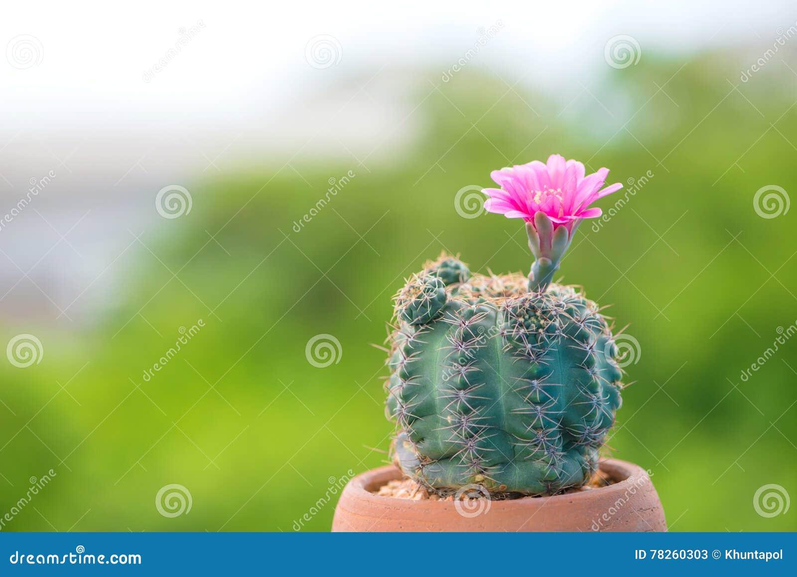 Κλειστοί επάνω κάκτος και λουλούδι στο δοχείο