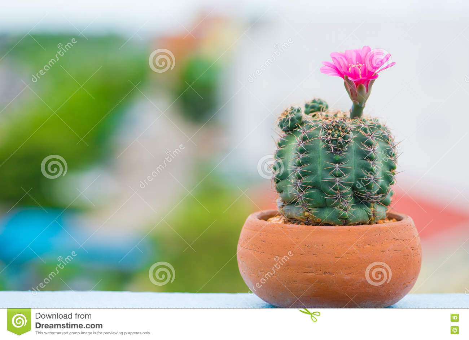 Κλειστό επάνω λουλούδι του κάκτου