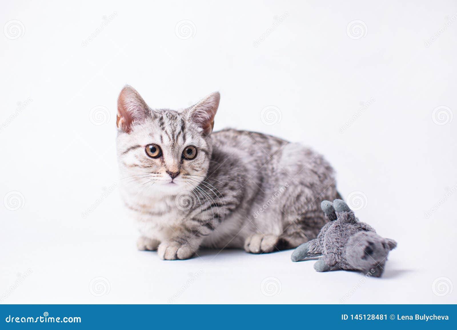 Λίγη γάτα που εγκαθιστά στο άσπρο πάτωμα