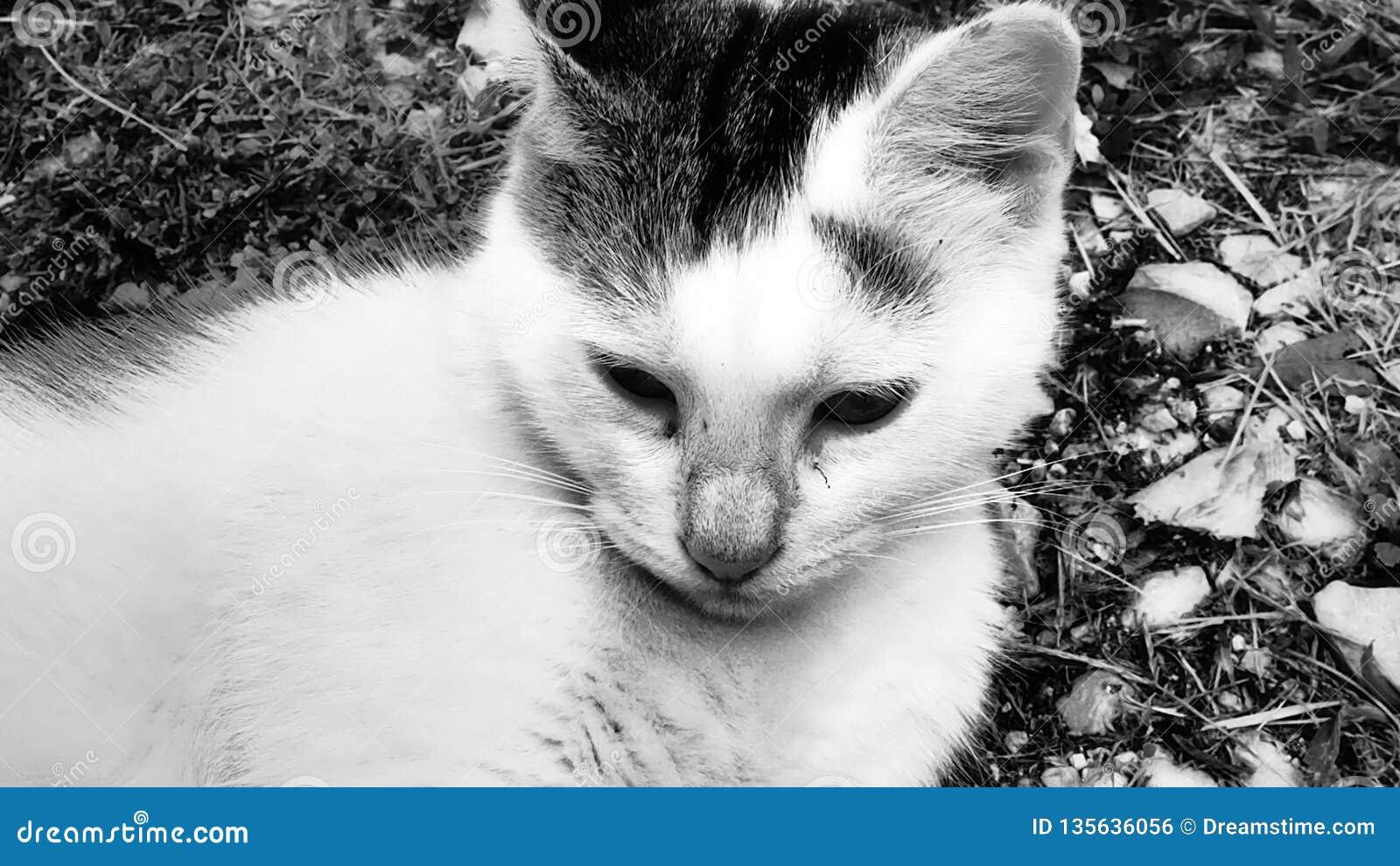 Λίγη χαριτωμένη γάτα στηρίζεται