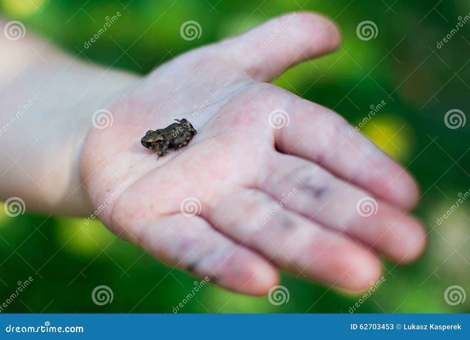 Λίγος βάτραχος σε ετοιμότητα του μωρού