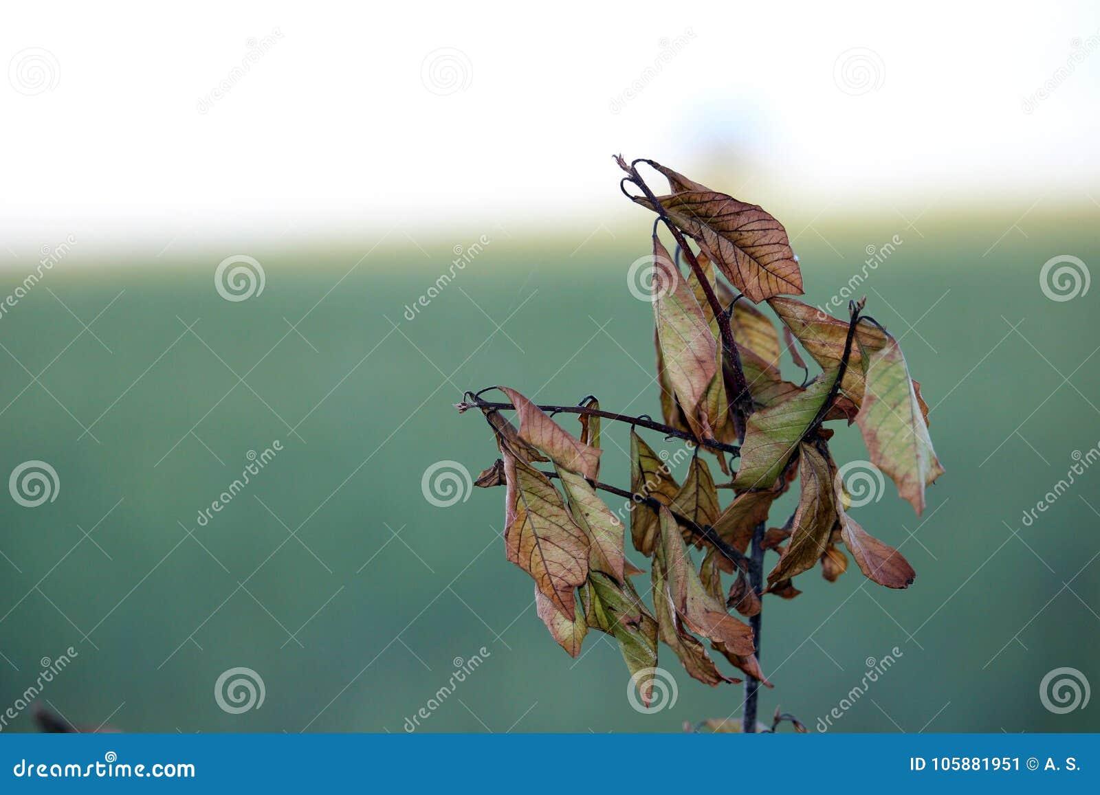 Λίγος κλάδος με τα νεκρά φύλλα στο φθινόπωρο, πρόσφατο καλοκαίρι φωτογραφία