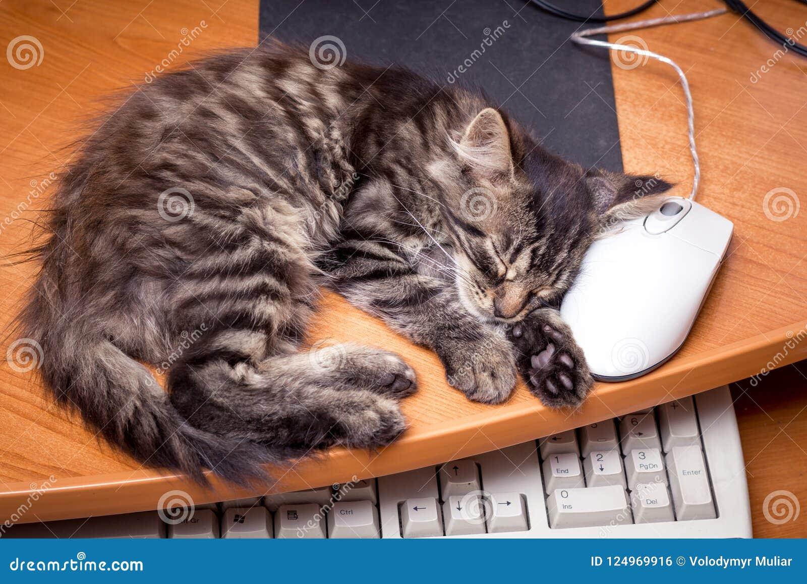 Λίγος ύπνος γατακιών κοντά στον υπολογιστή, που βάζει το κεφάλι του επάνω