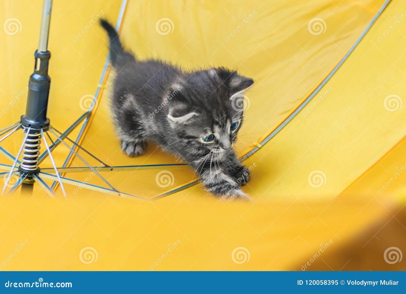 Λίγο γατάκι παίζει στην ομπρέλα Ριγωτό εύθυμο γατάκι