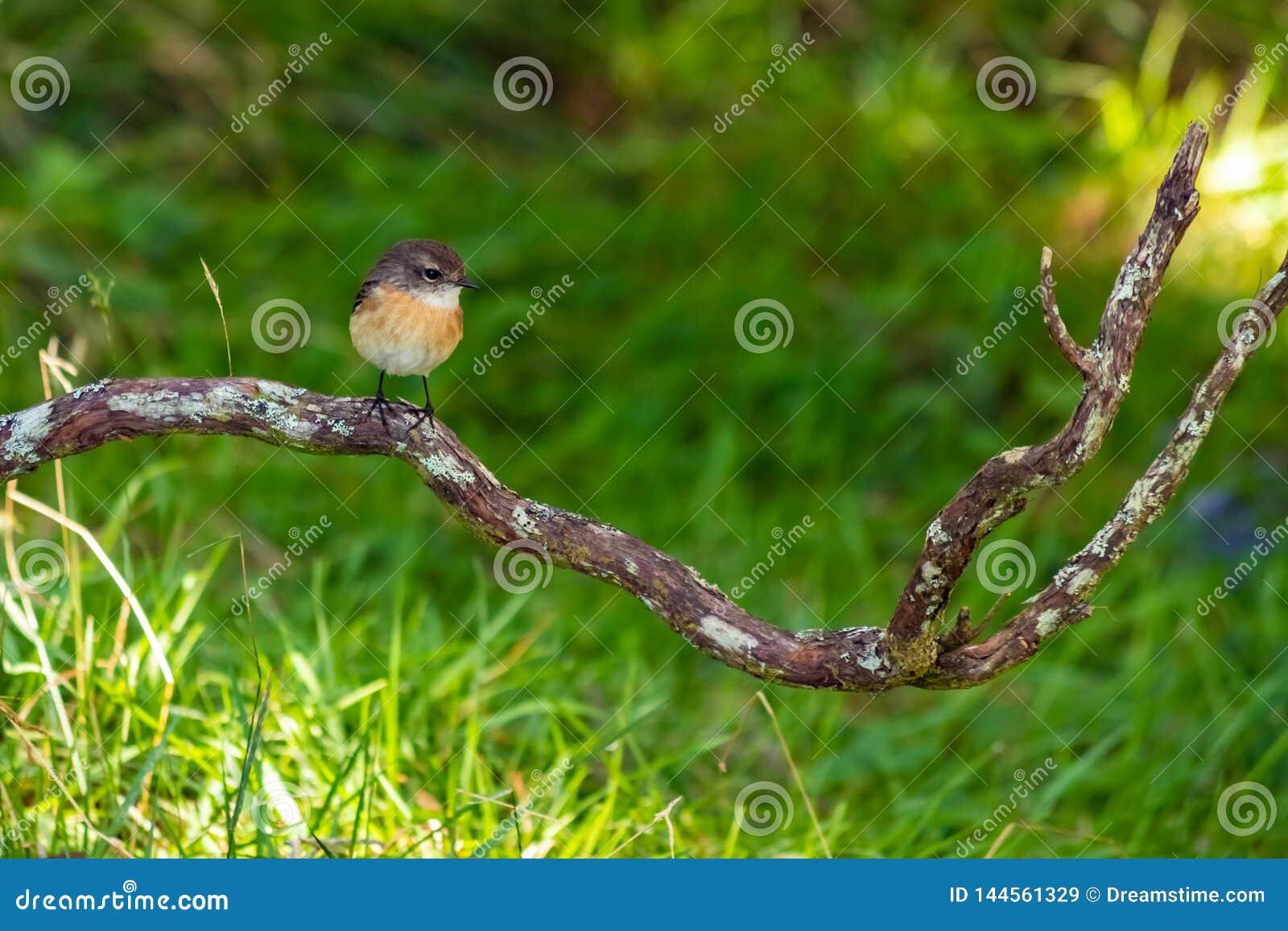 Λίγο πουλί σε ένα δέντρο