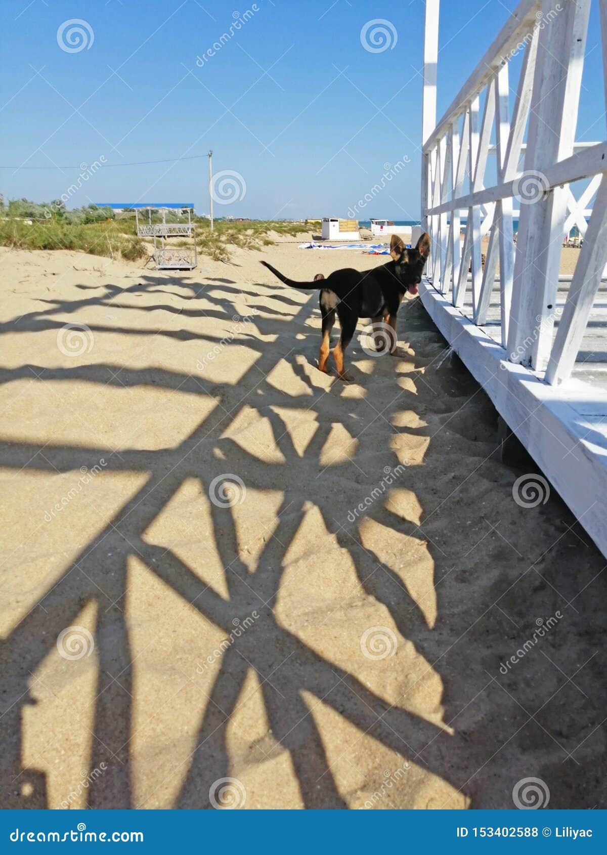 Λίγο σκυλί στην άμμο